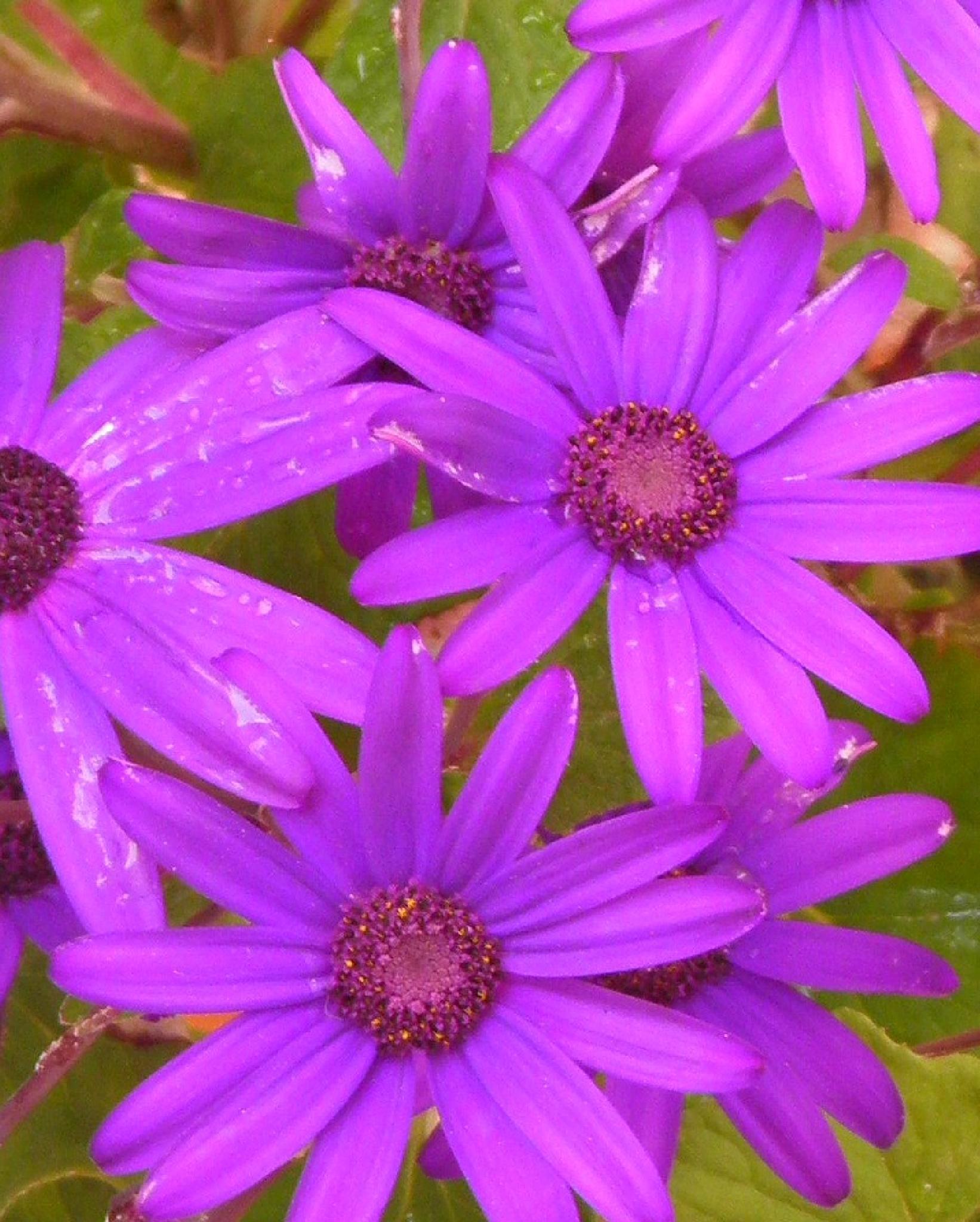 Starlite flowers...... by karenanne.borsani