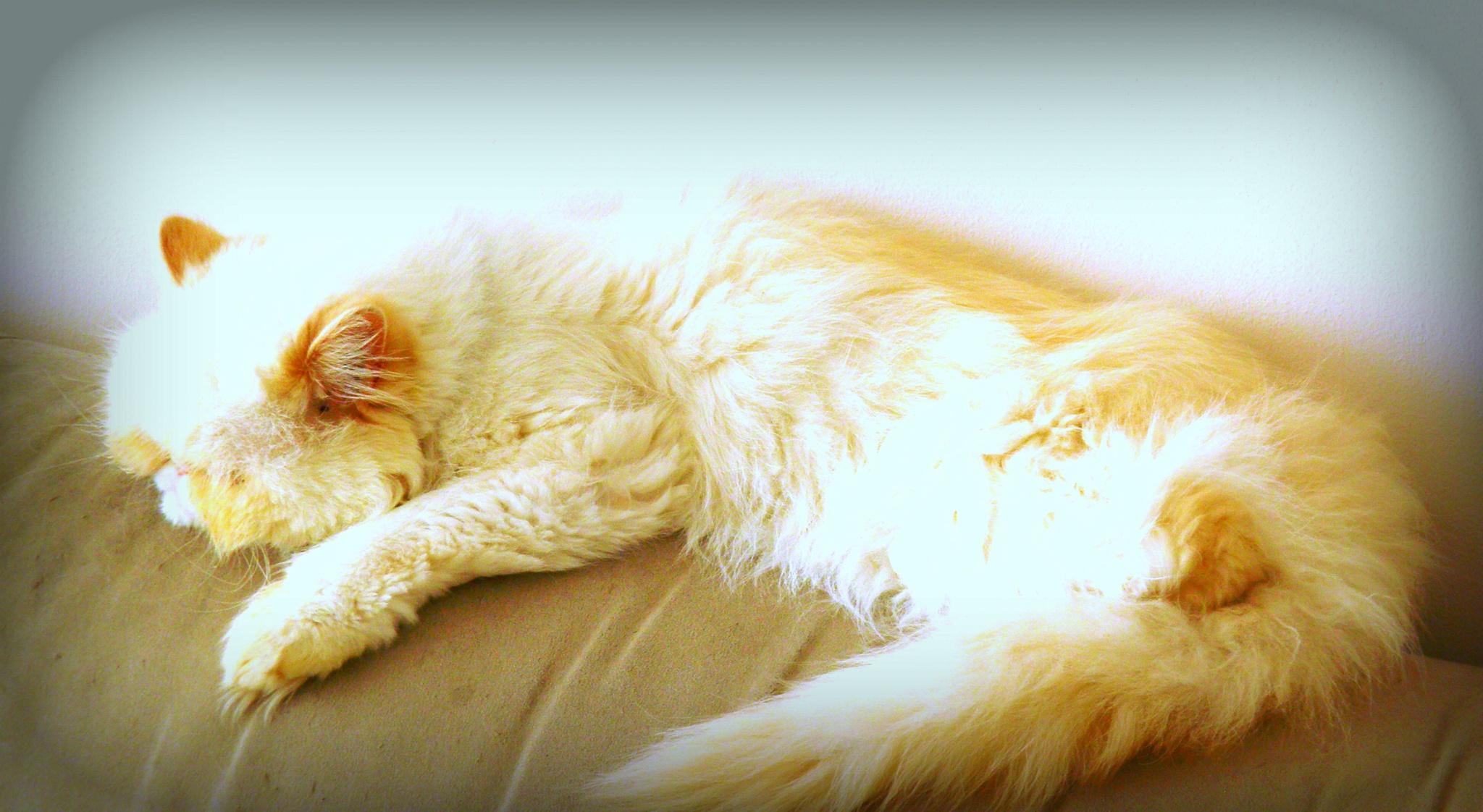 Asleep on the sofa xxx by karenanne.borsani