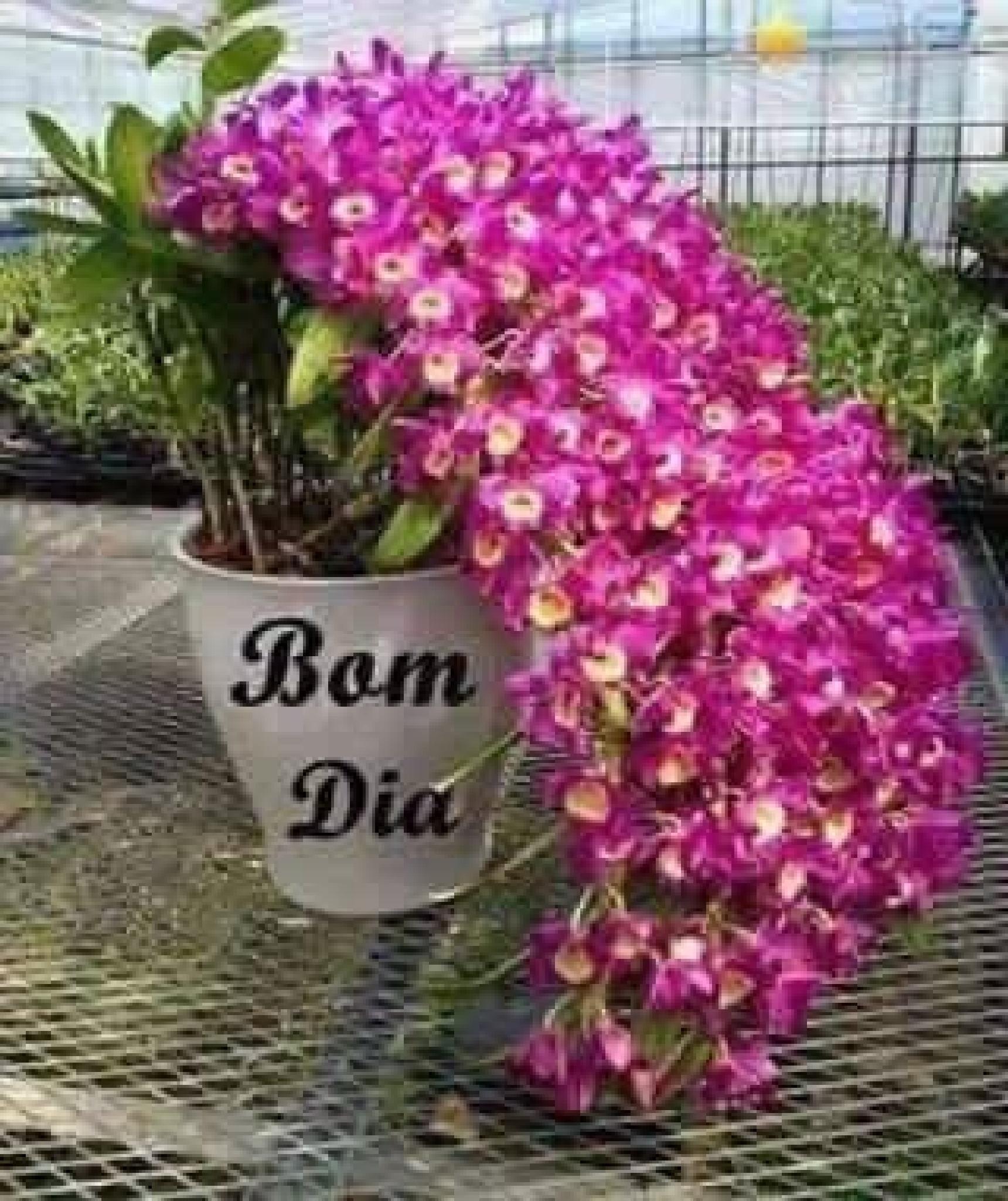 Have a lovely Sunday xxxx by karenanne.borsani