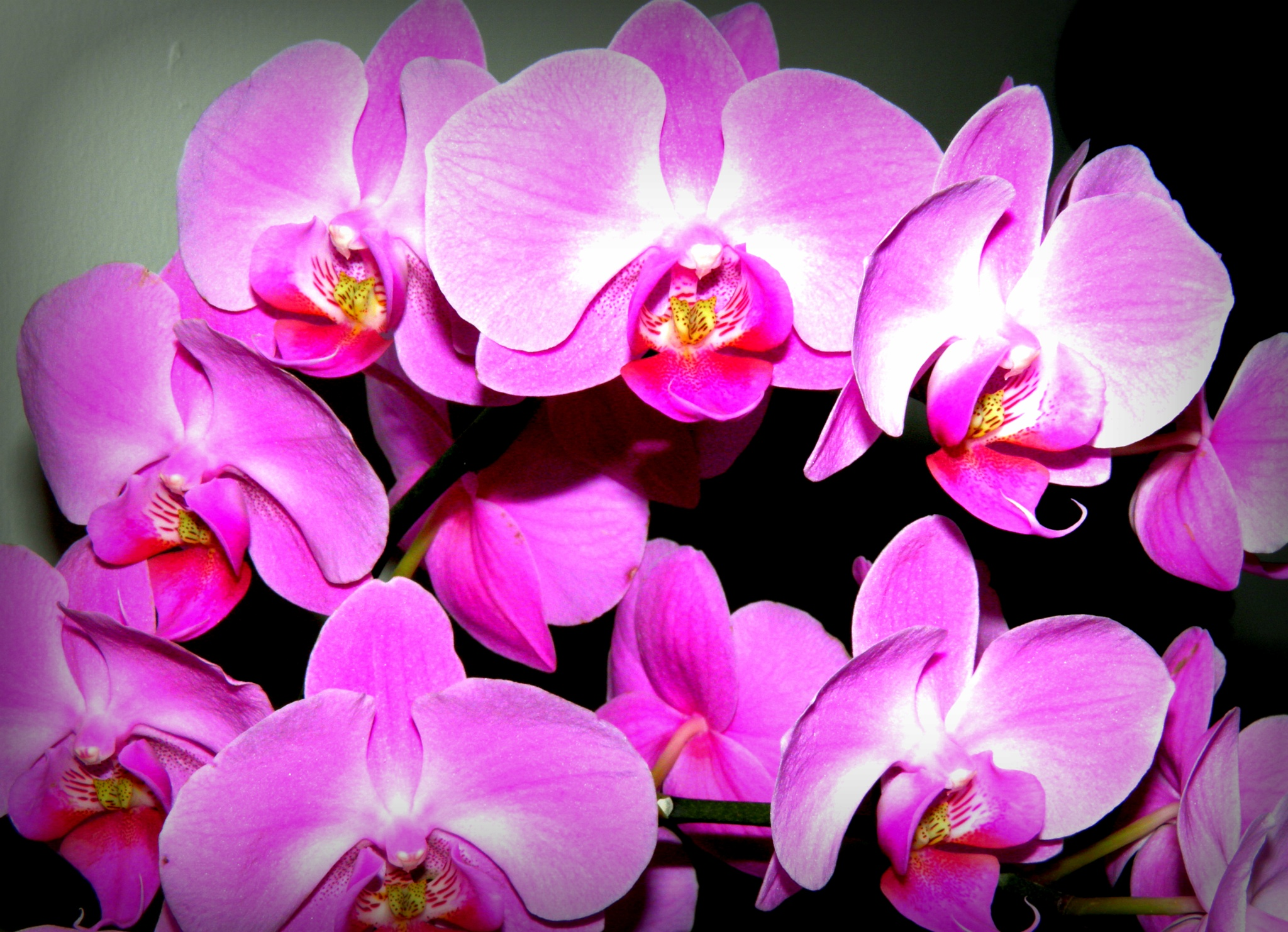 Have an orchid weekend...... by karenanne.borsani