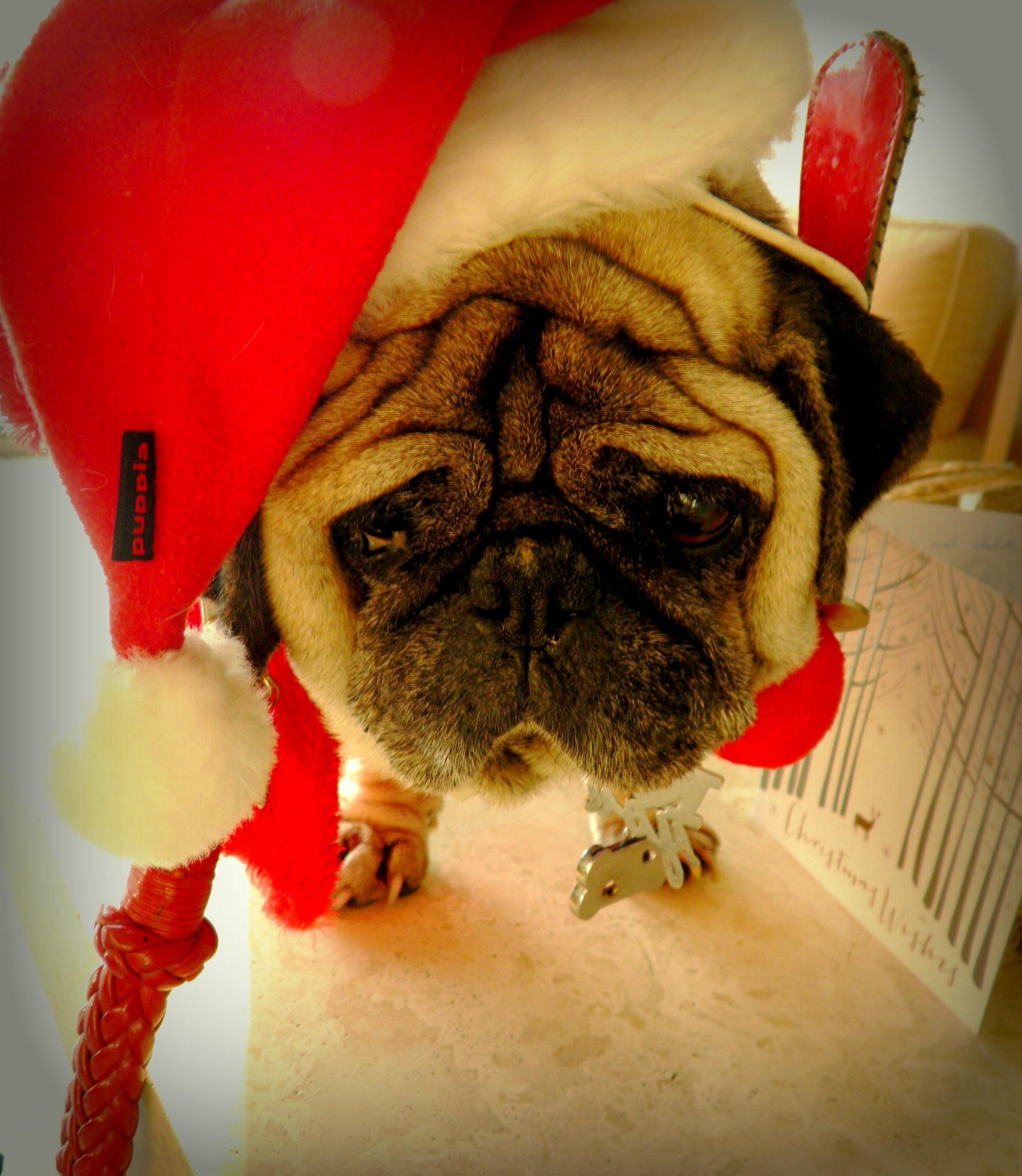 Buon Natale da Giorgino xxx by karenanne.borsani