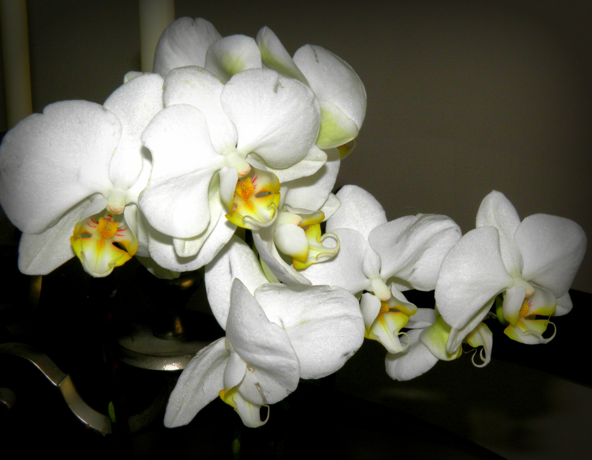 Happy Orchid Friday ... by karenanne.borsani