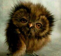A little owl xxx by karenanne.borsani