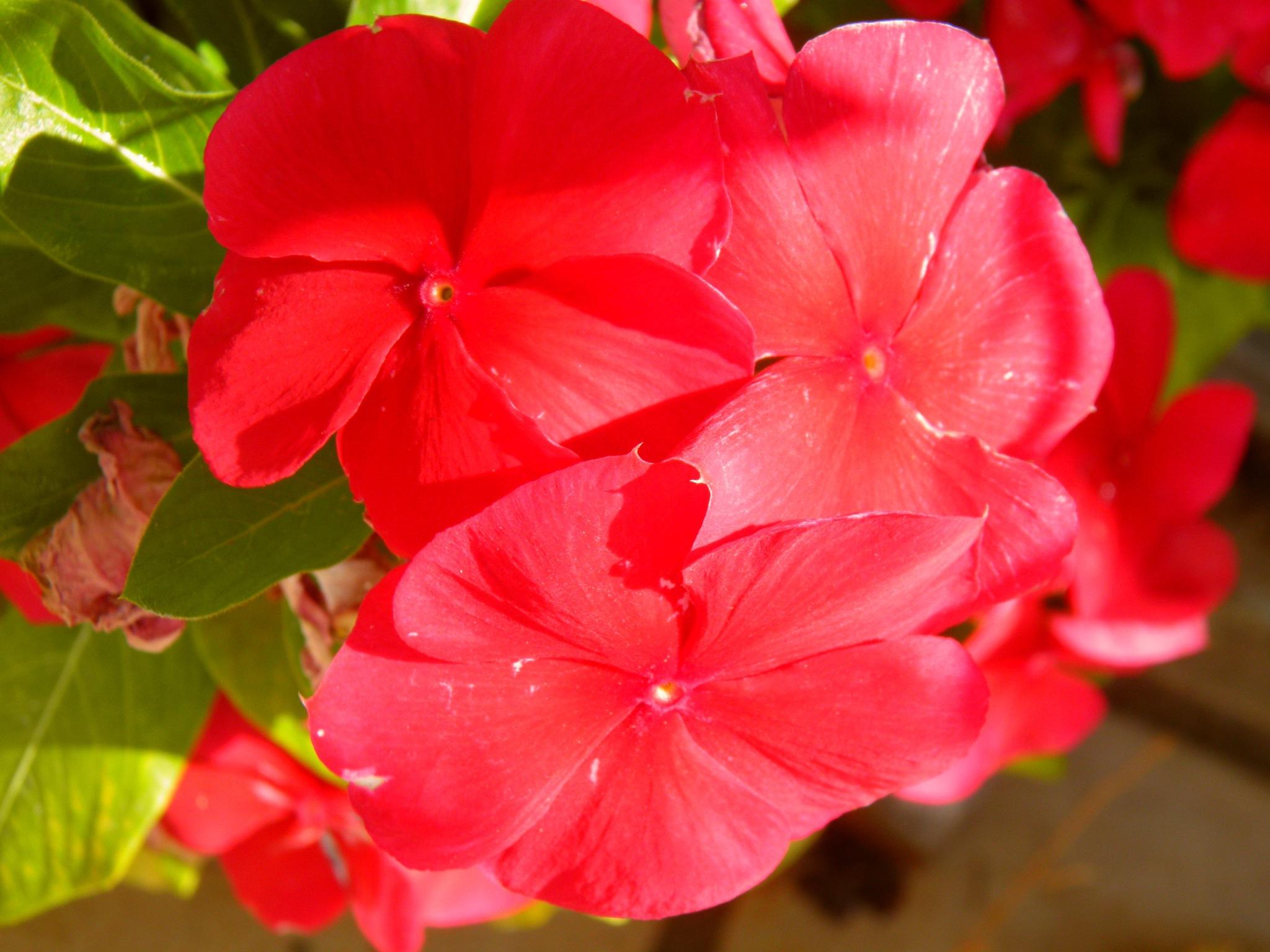 Hapy Monday my friends xxx by karenanne.borsani
