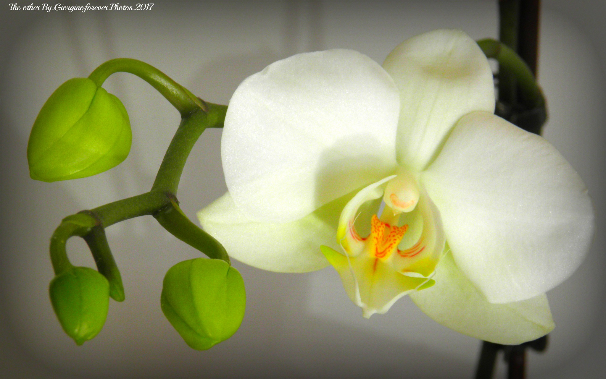 The other orchid back to life great xxx by karenanne.borsani