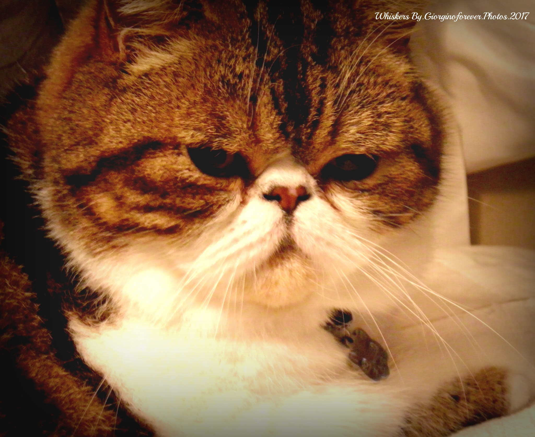Whiskers xxx by karenanne.borsani