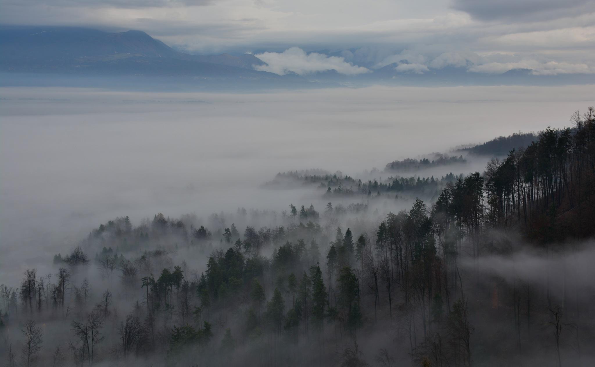 Foggy morning by Egon Cokan