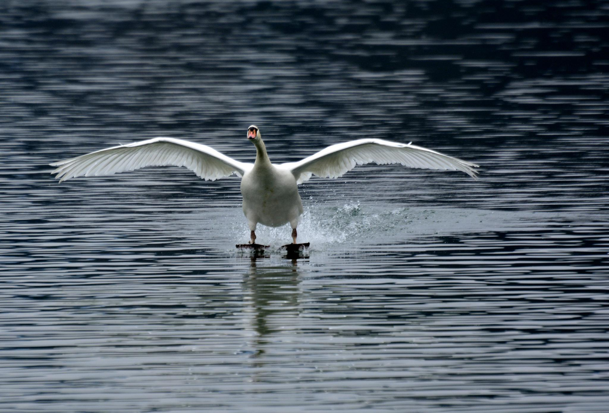 Perfect landing by Egon Cokan