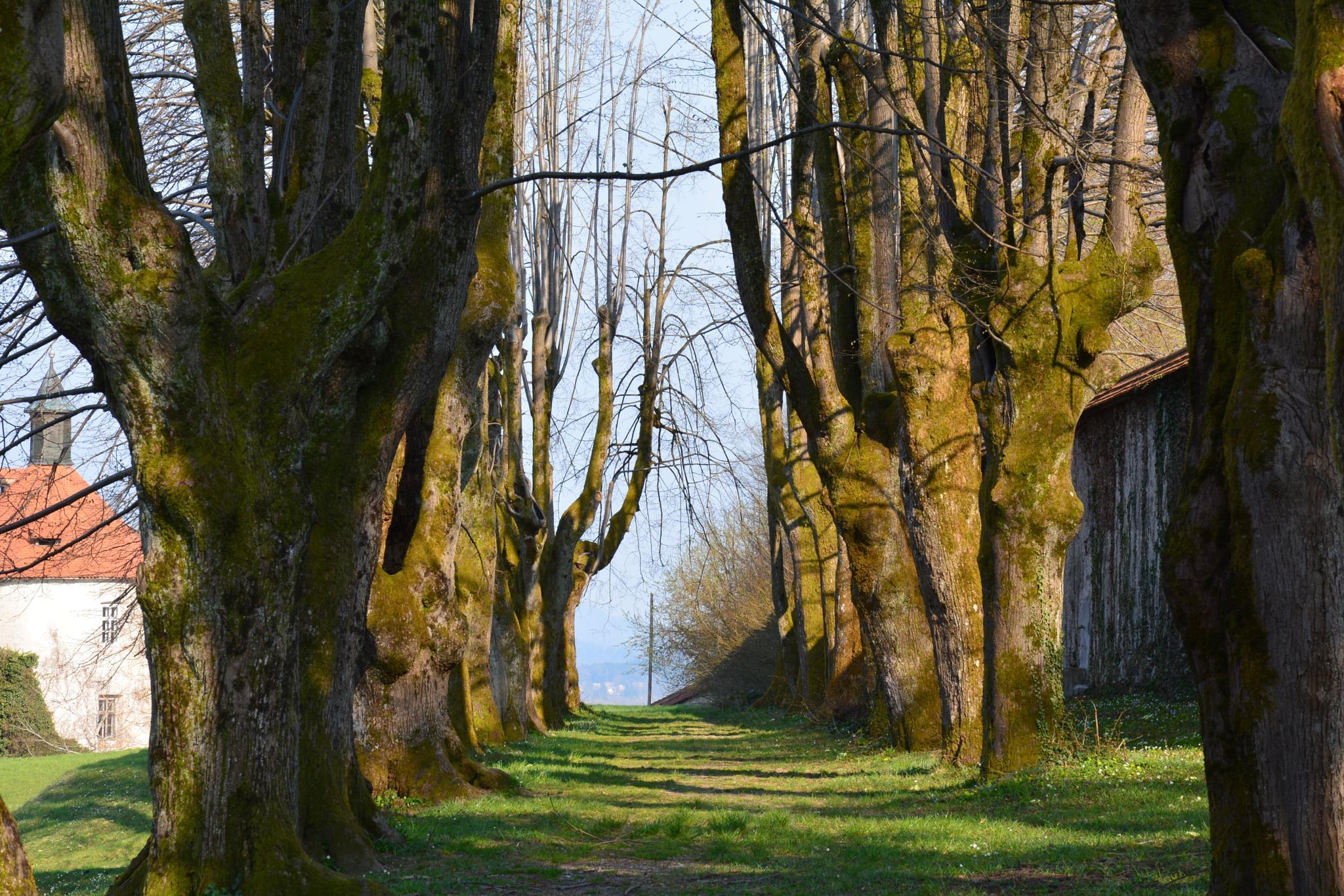 On the walk by Egon Cokan