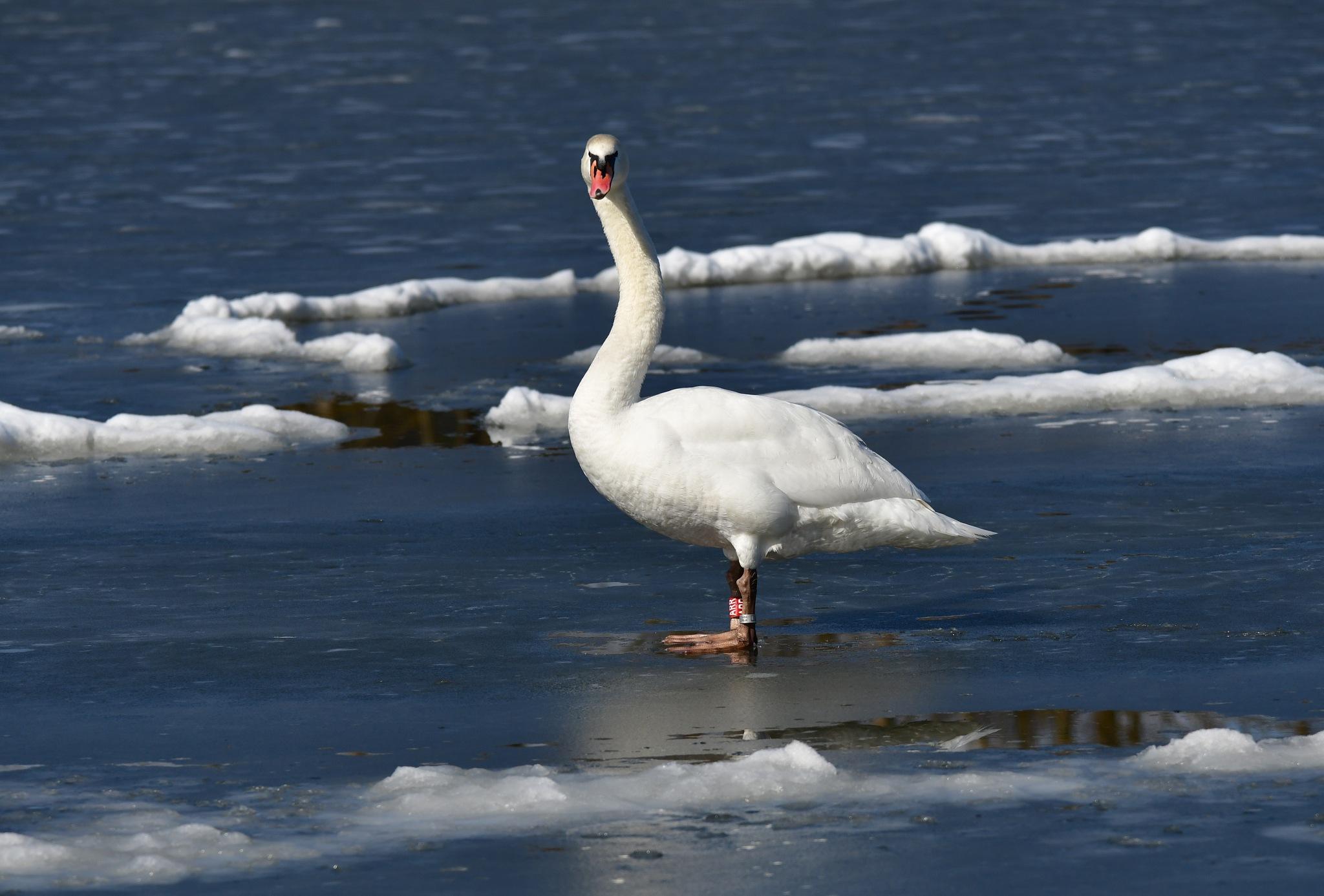 I do not like ice by Egon Cokan