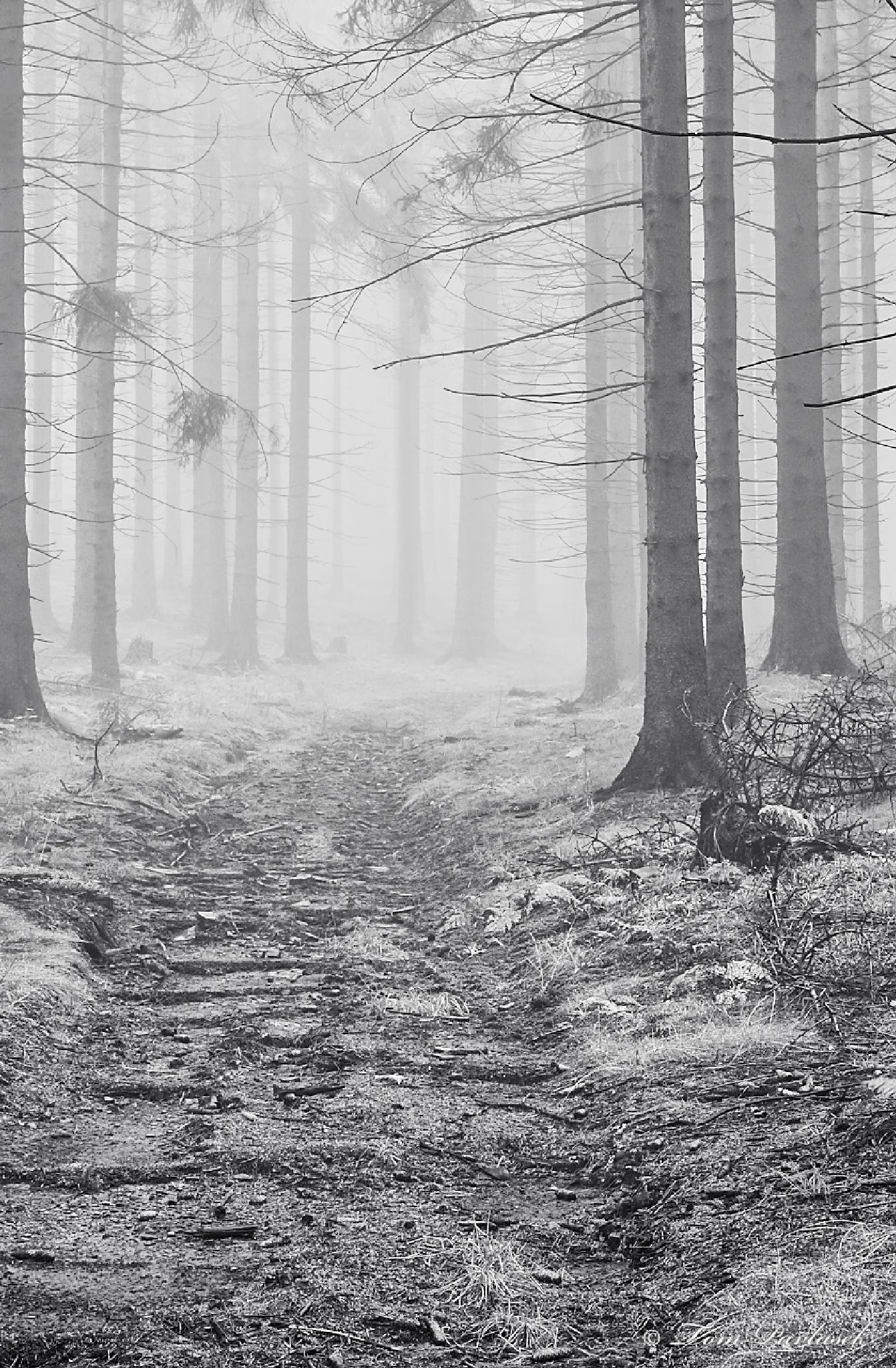 Forest footpath by tompavlas
