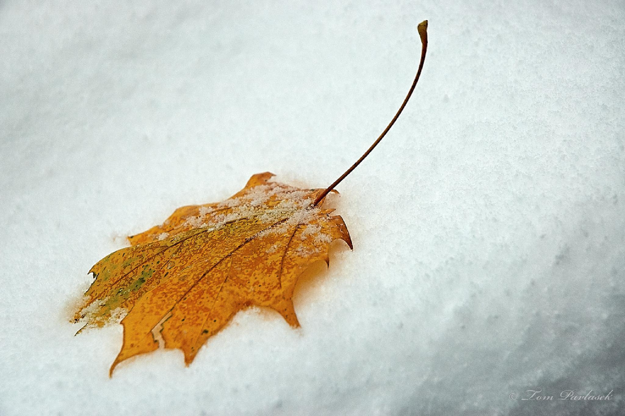 Leaf by tompavlas