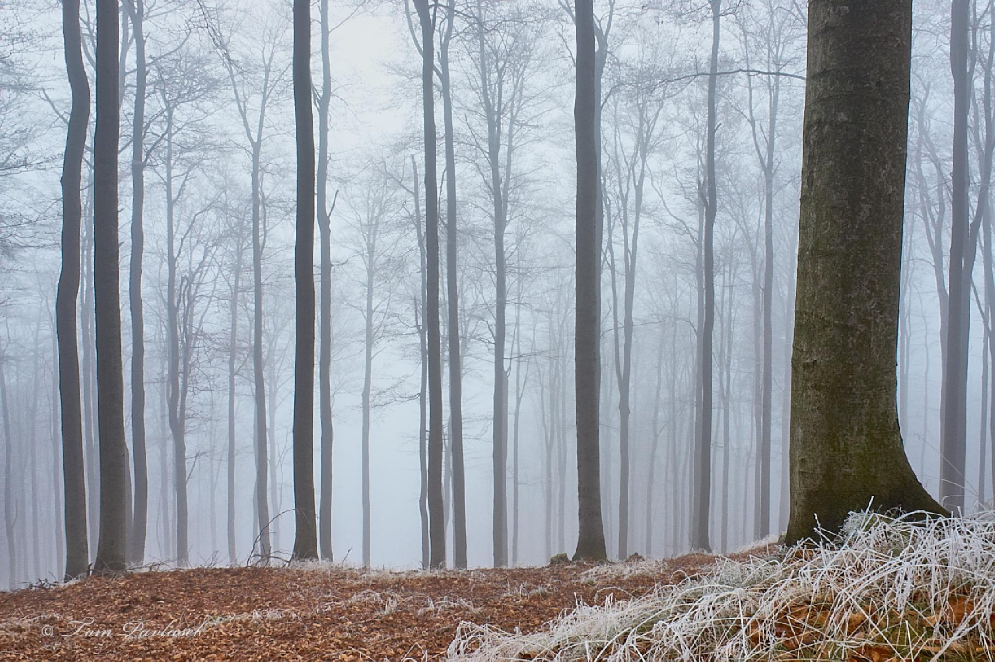 Forest by tompavlas