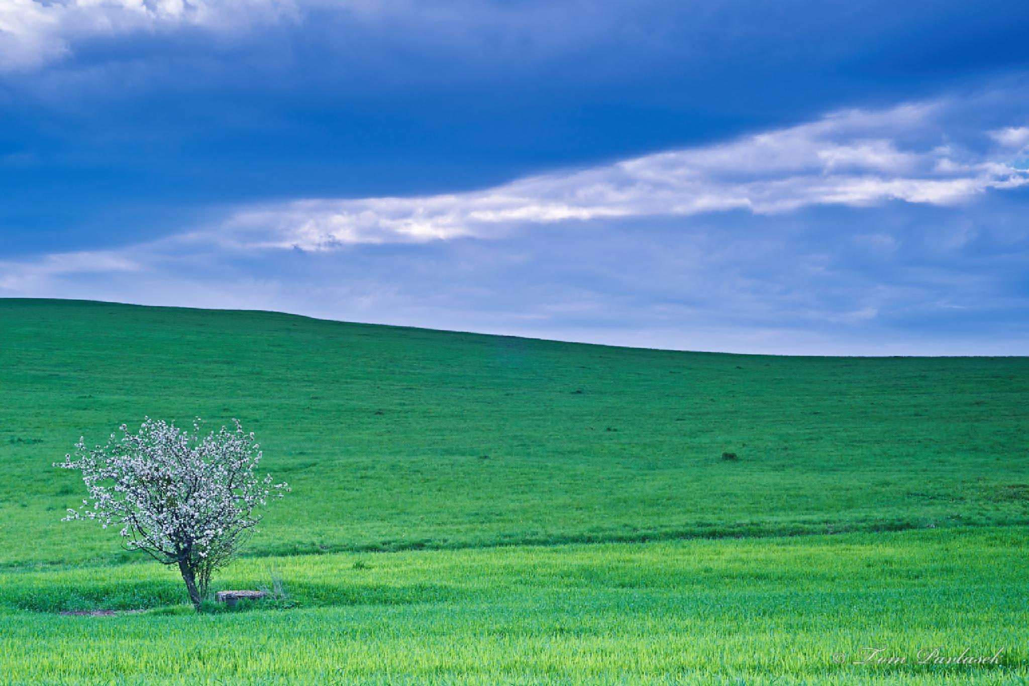 Tree by tompavlas