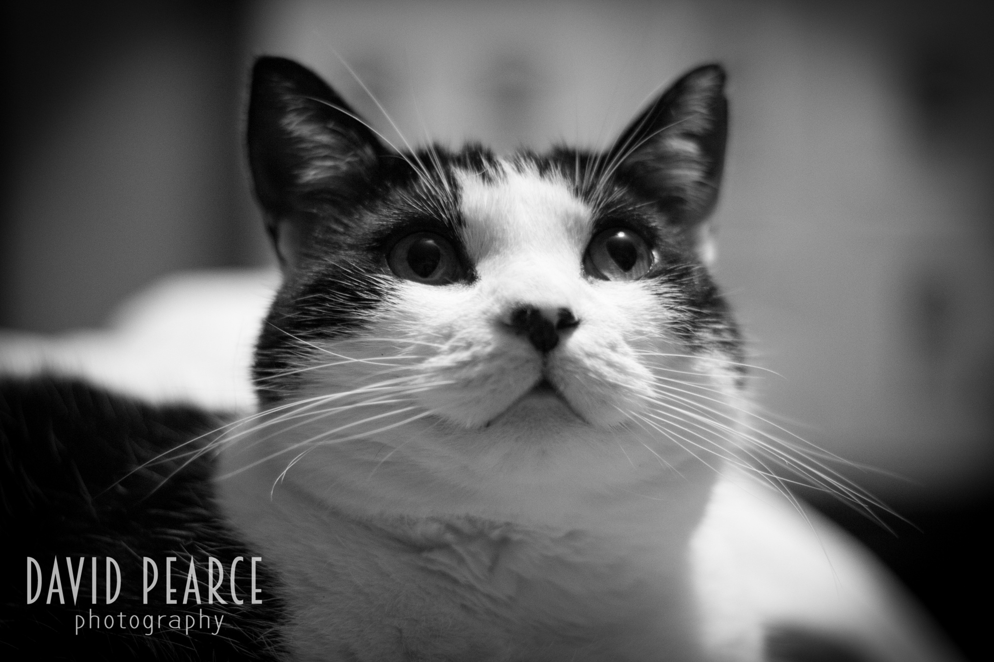 Sydney the cat by David Pearce