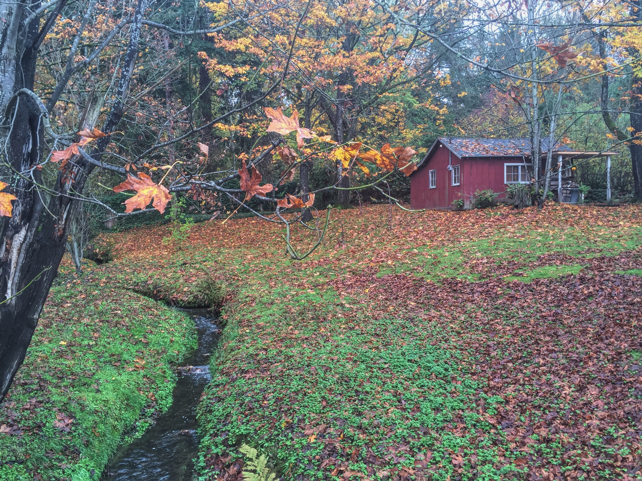 Creek and Red House by suna