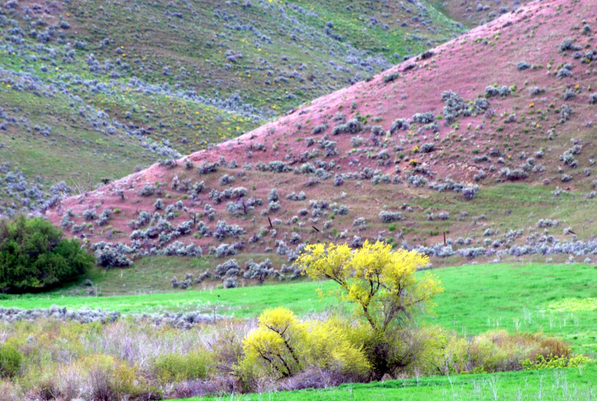 Spring colors in Eastern Oregon by sue.holtz