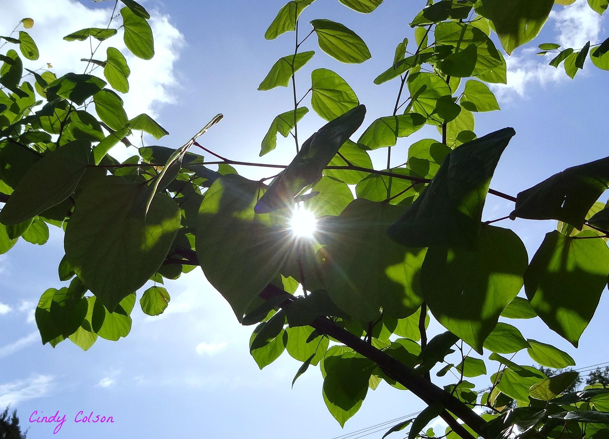 Framed Sun by cindy.colson.7