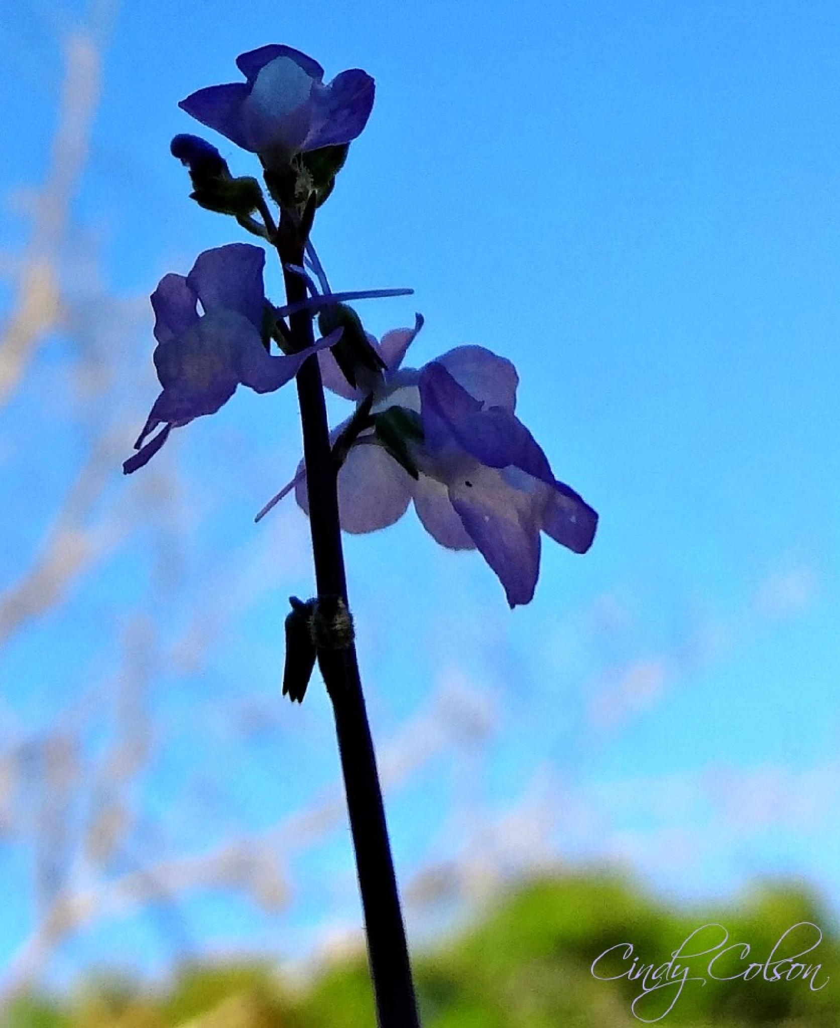 Against the Blue Sky by cindy.colson.7