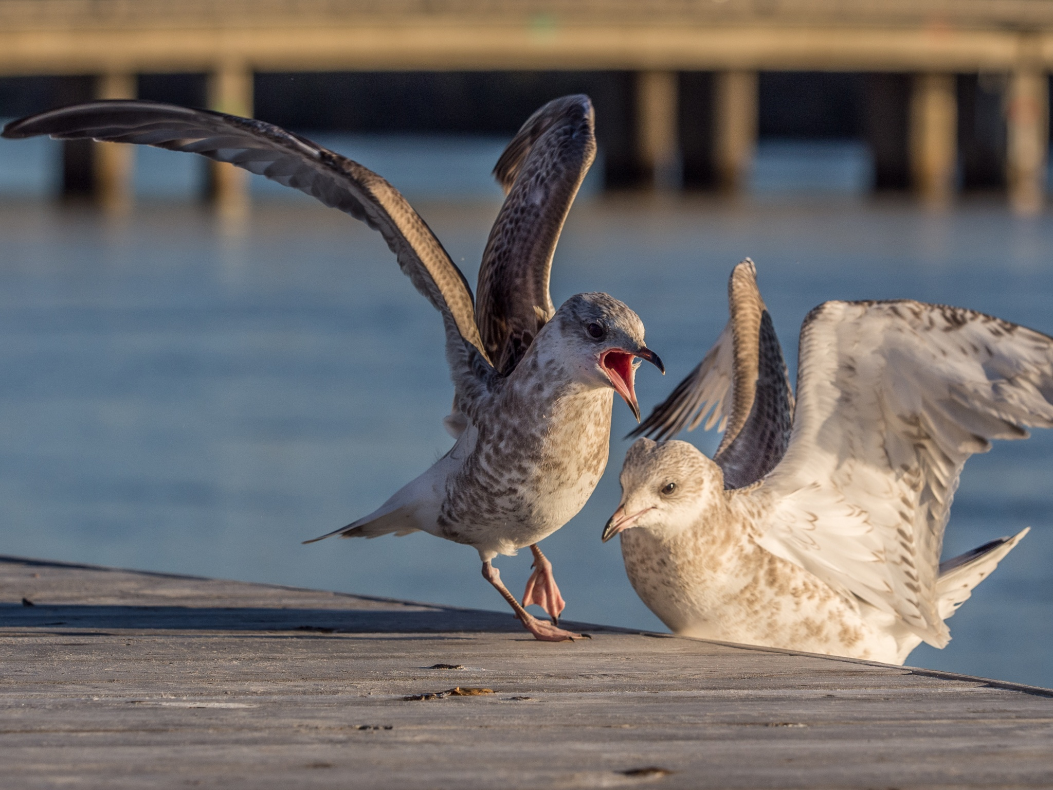 Seagulls by olof.rosenius