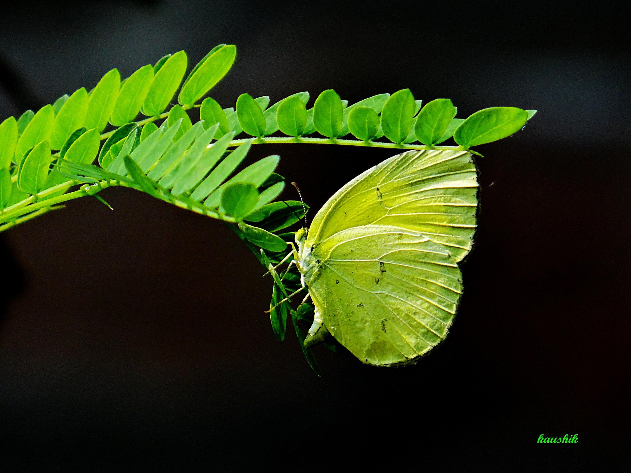 BEAUTY OF NATURE  by Kaushik
