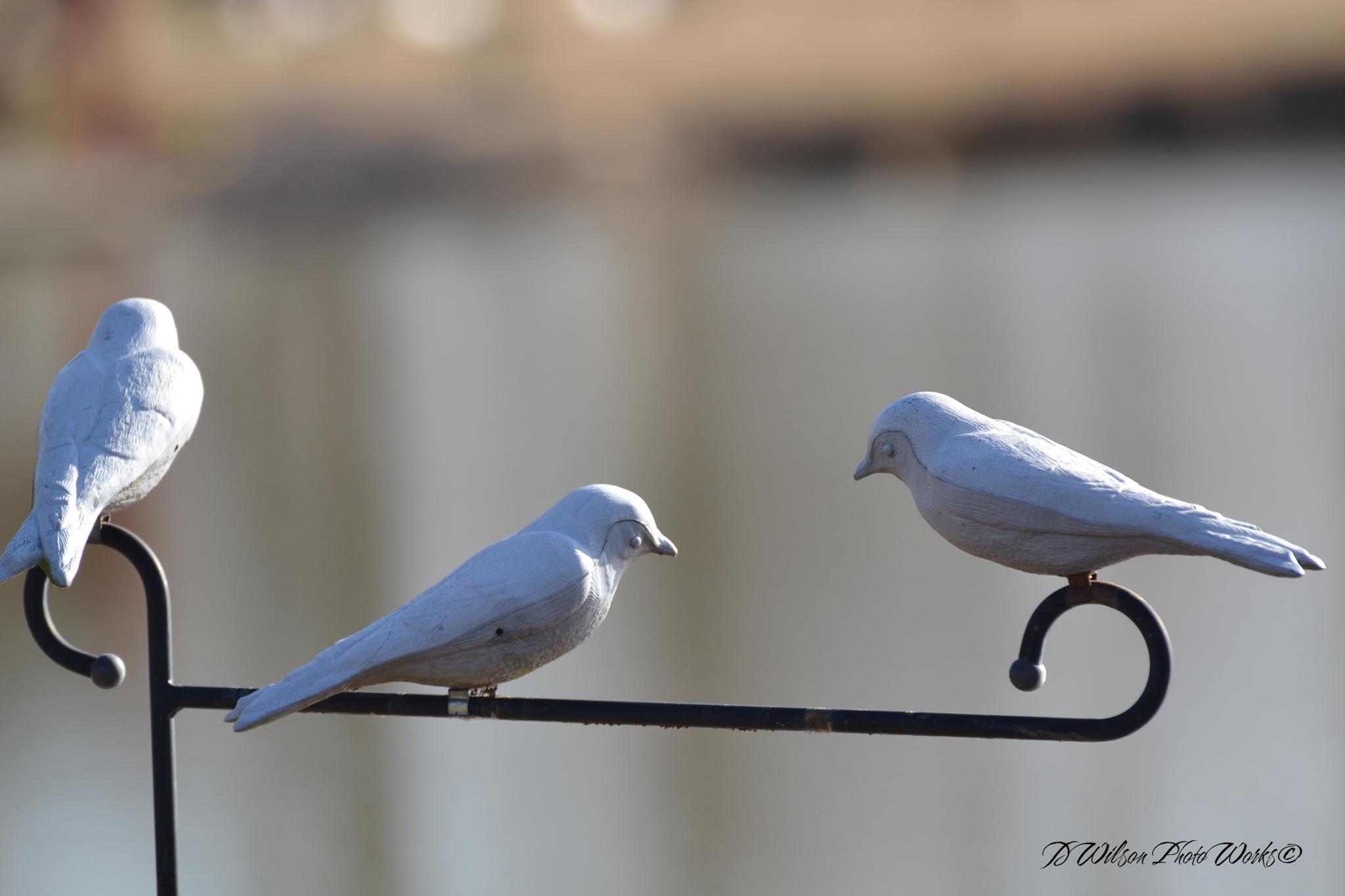 protecting birds by Debbie Wilson