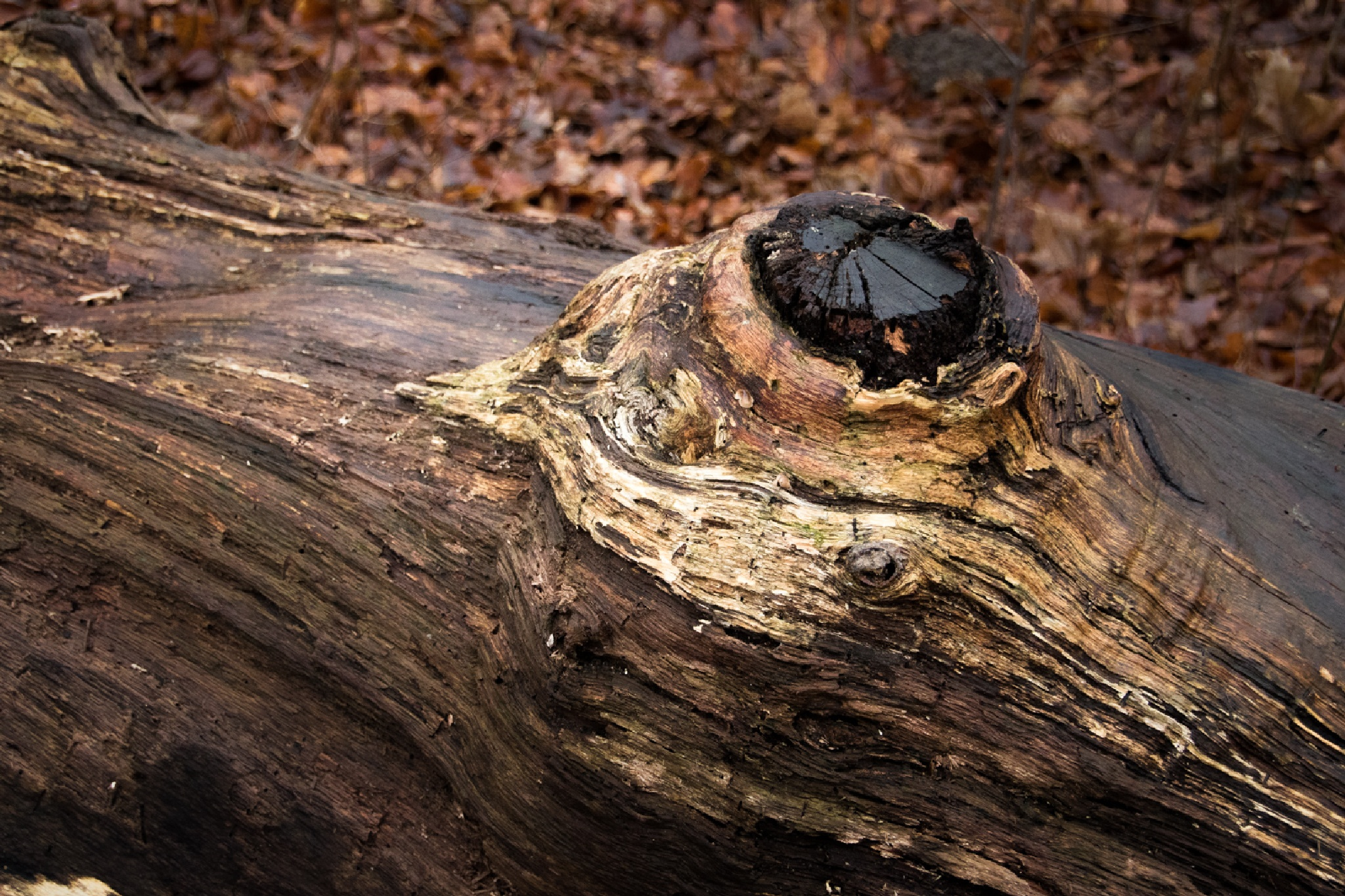 Old tree stump by maybritt hansen