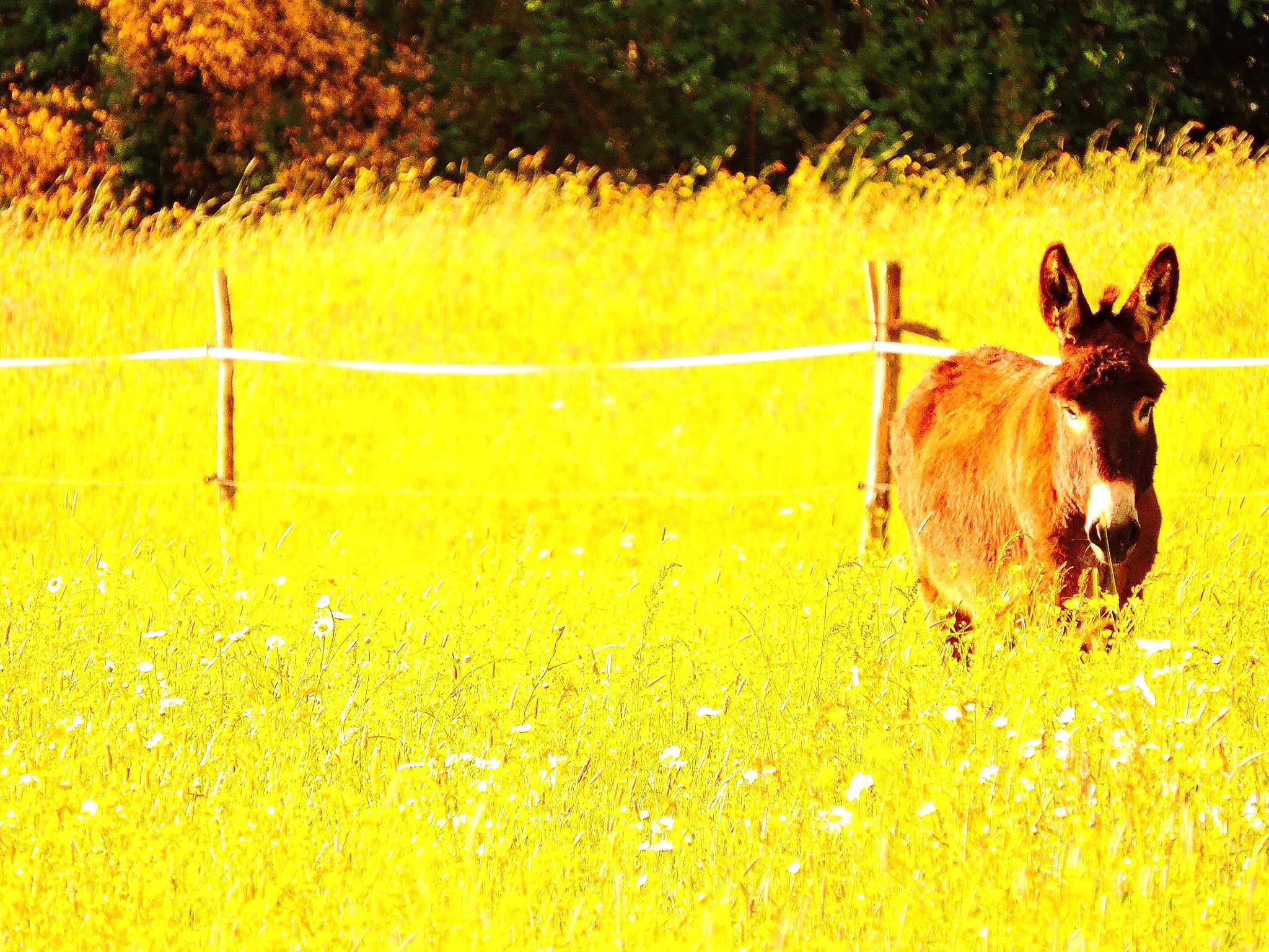Photo in Animal #âne #champ de fleur