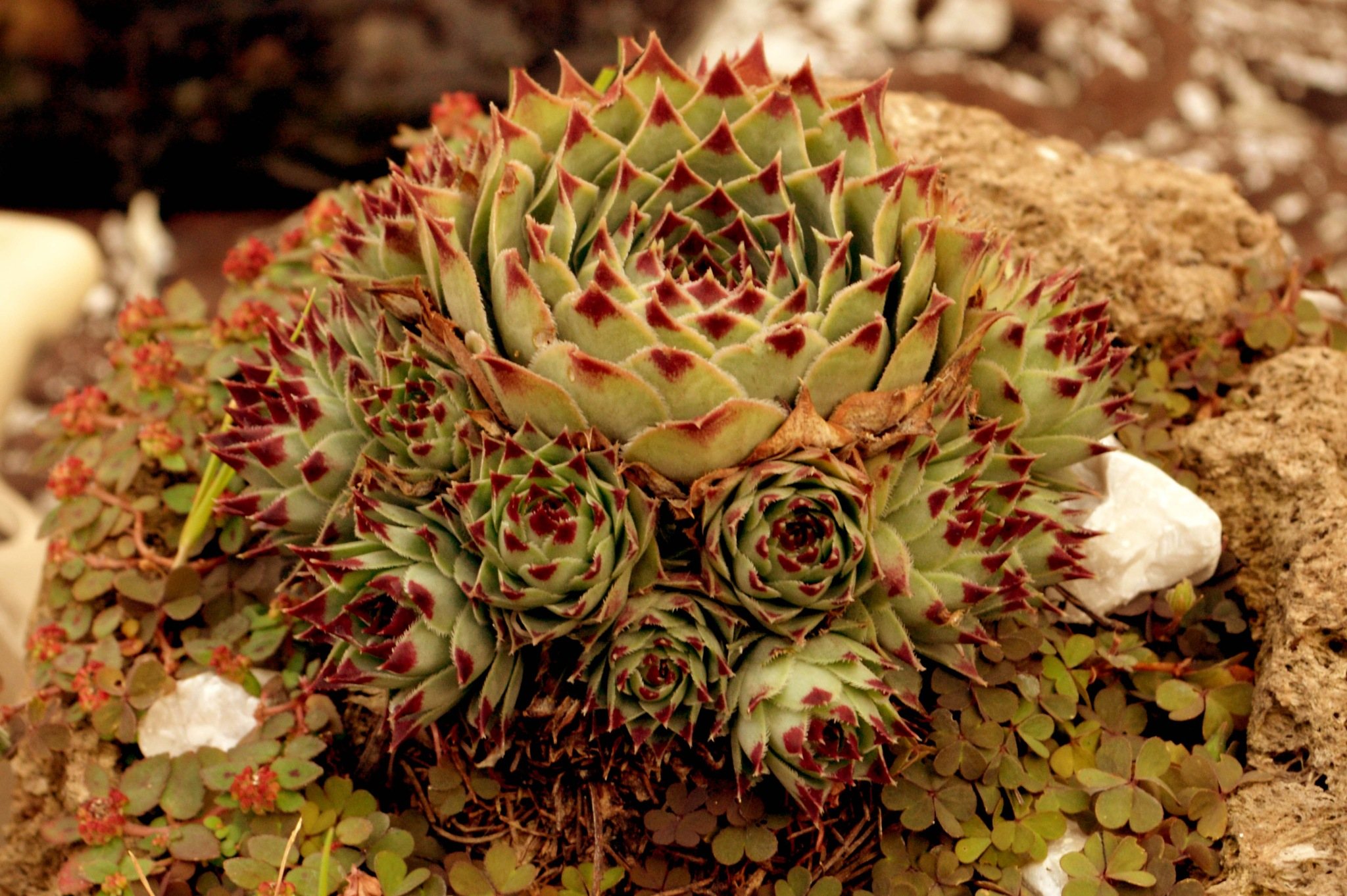 Cactus by Fernando