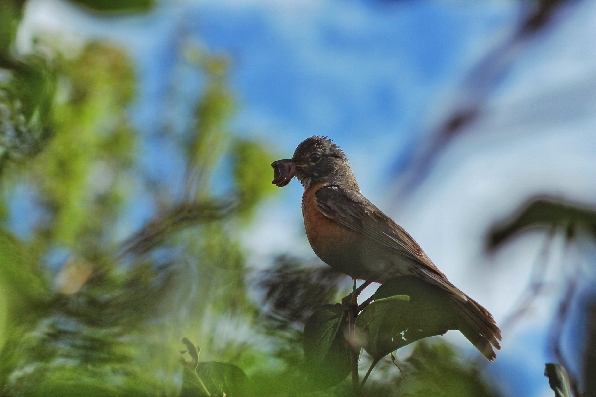 The Early Bird Gets Breakfast by shaunarwhitaker