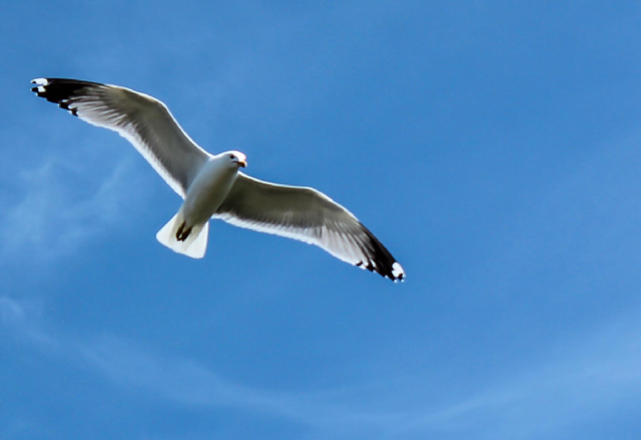 Seagull  by shaunarwhitaker