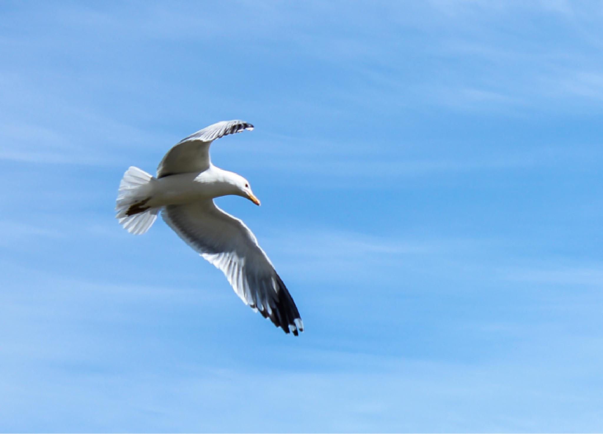 Seagull 2 by shaunarwhitaker
