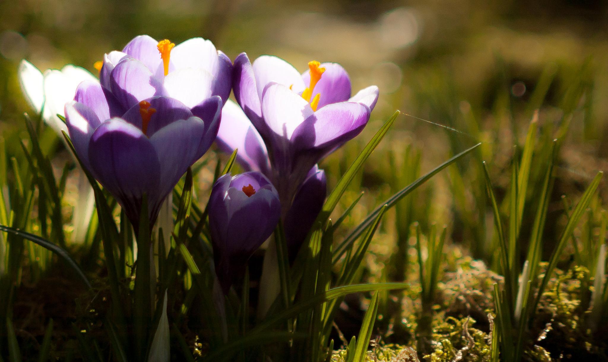 Springtime. by Carl Erik Tengesdal