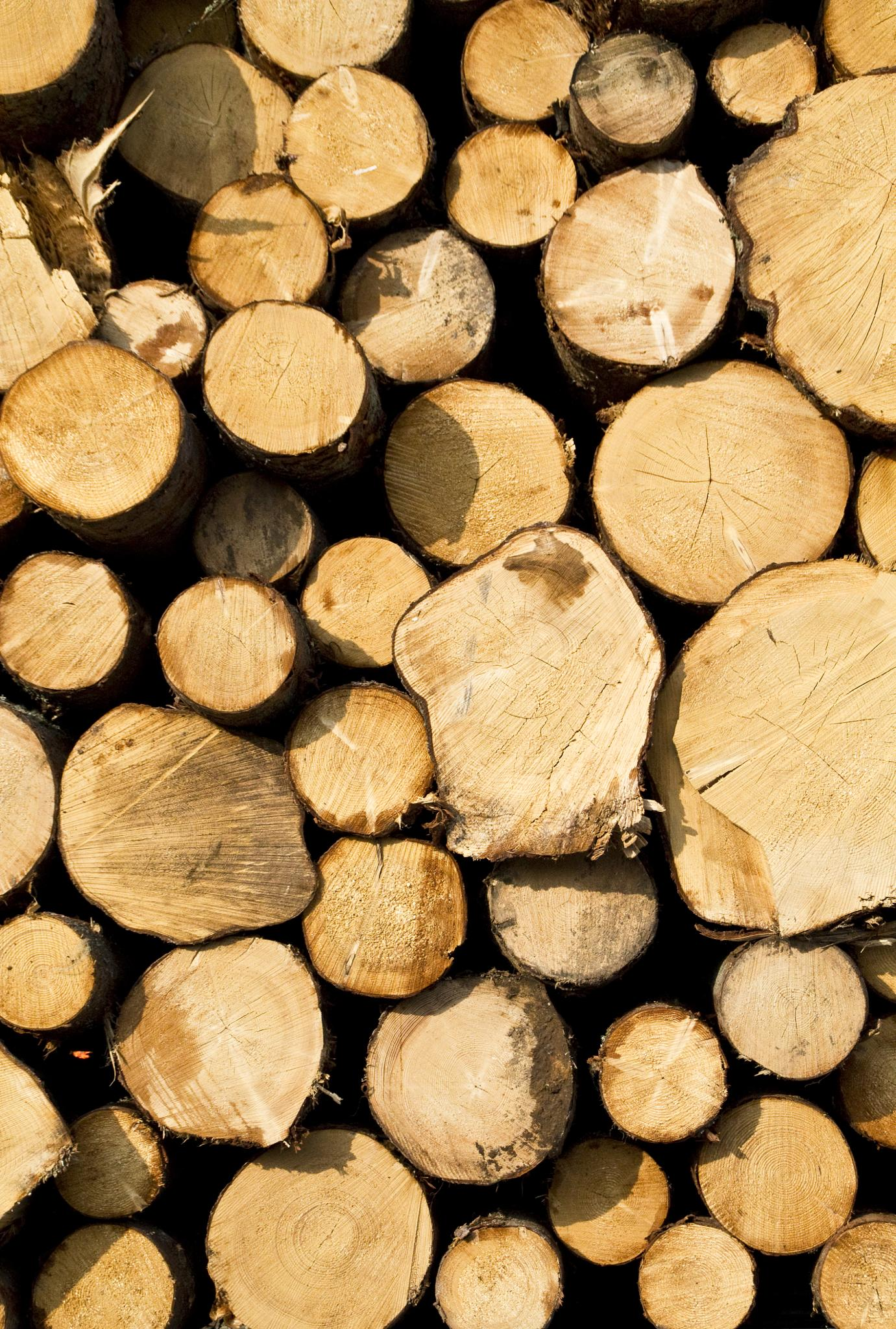 Timber by johan.stoltwestling