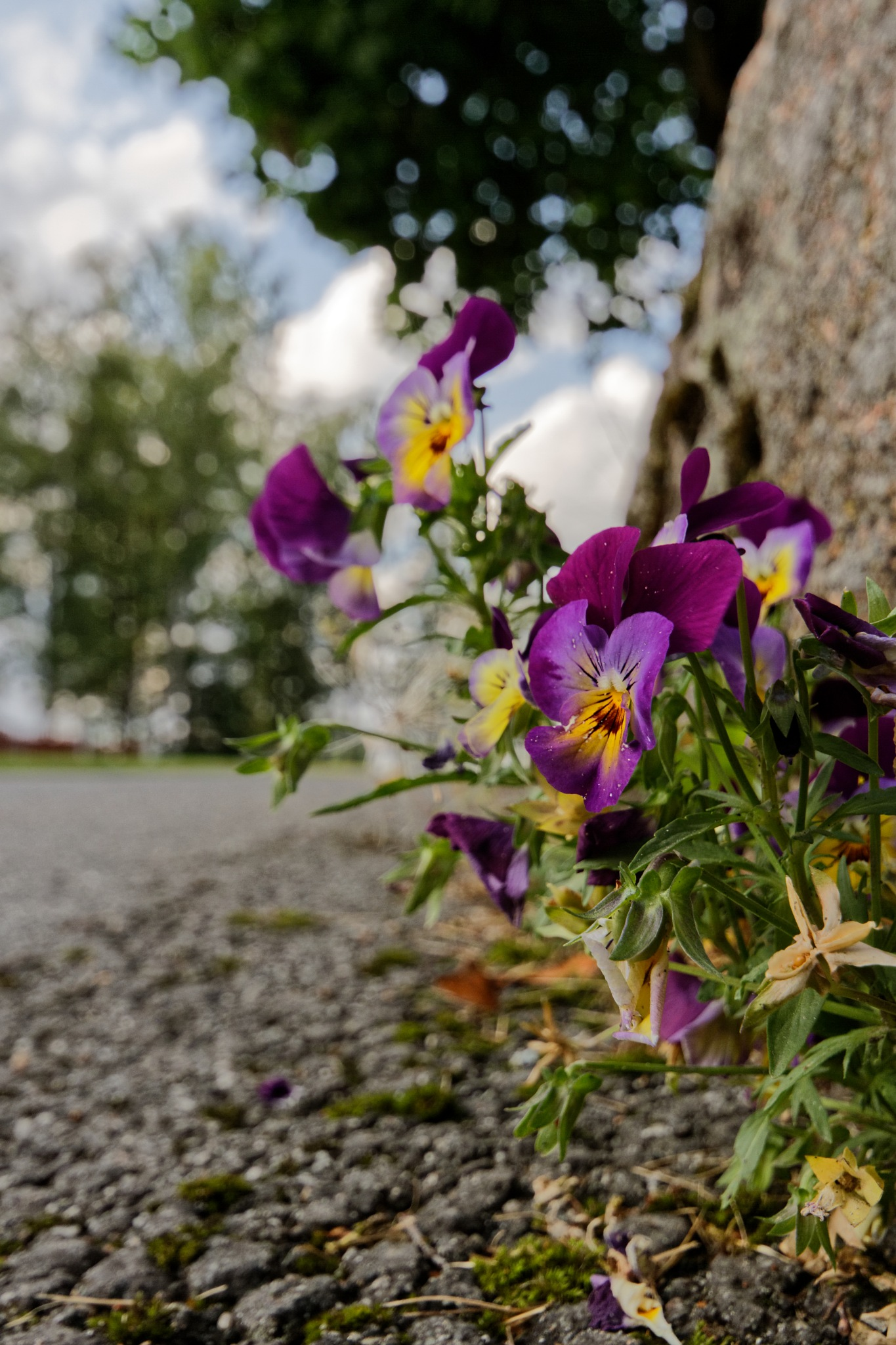 Flowers by johan.stoltwestling