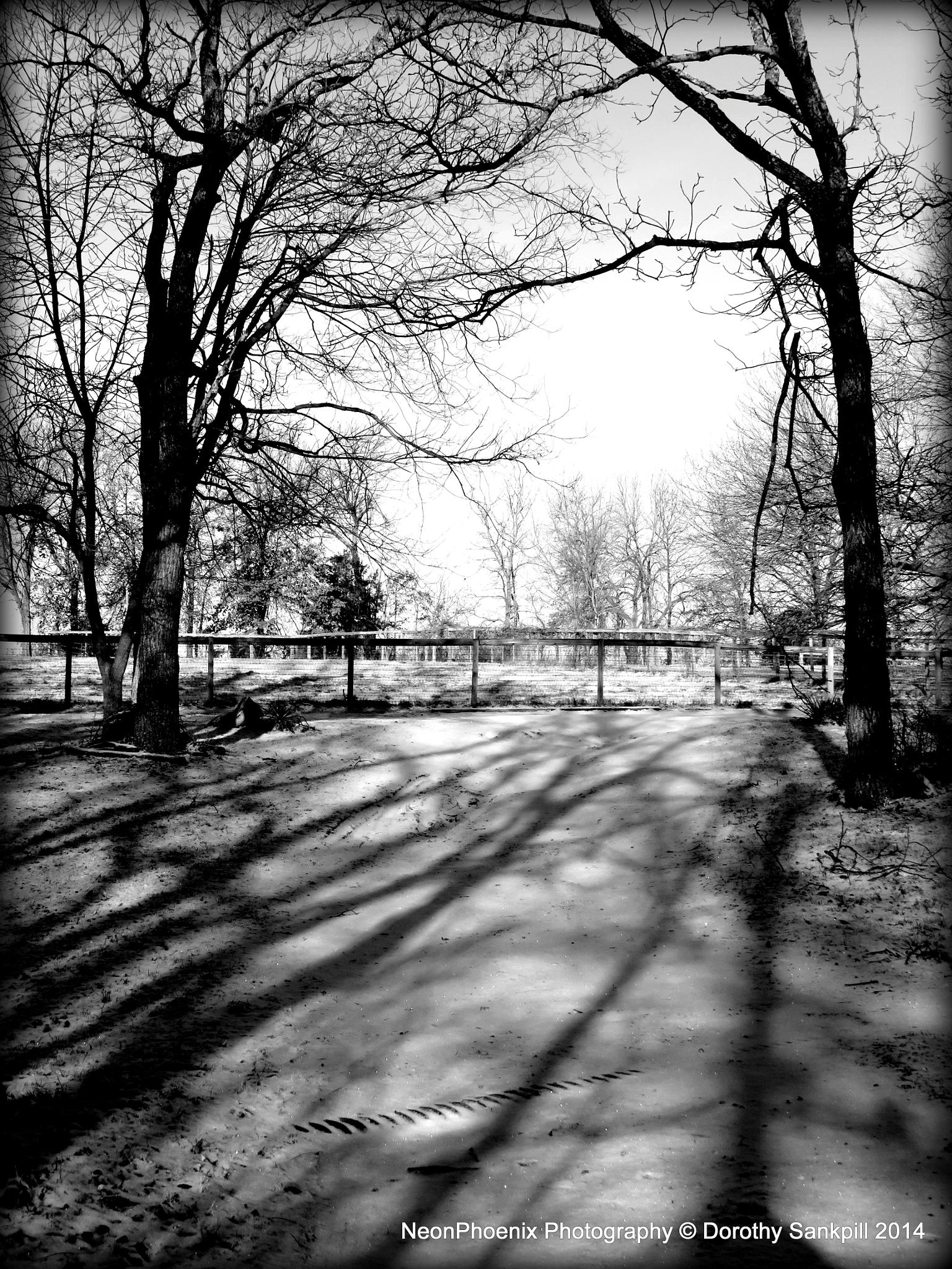 Morning Snow by NeonPhoenix