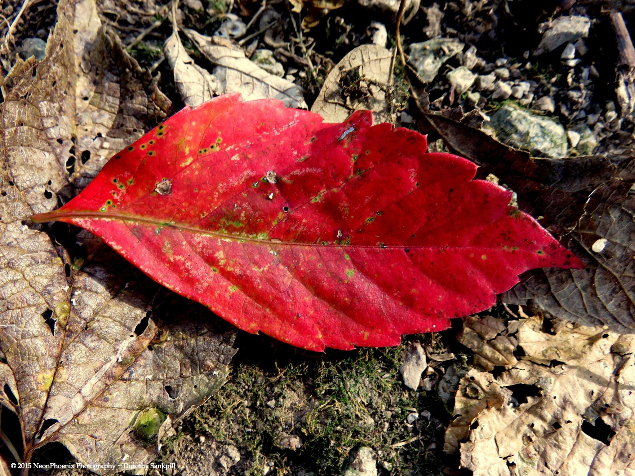 First Fall by NeonPhoenix
