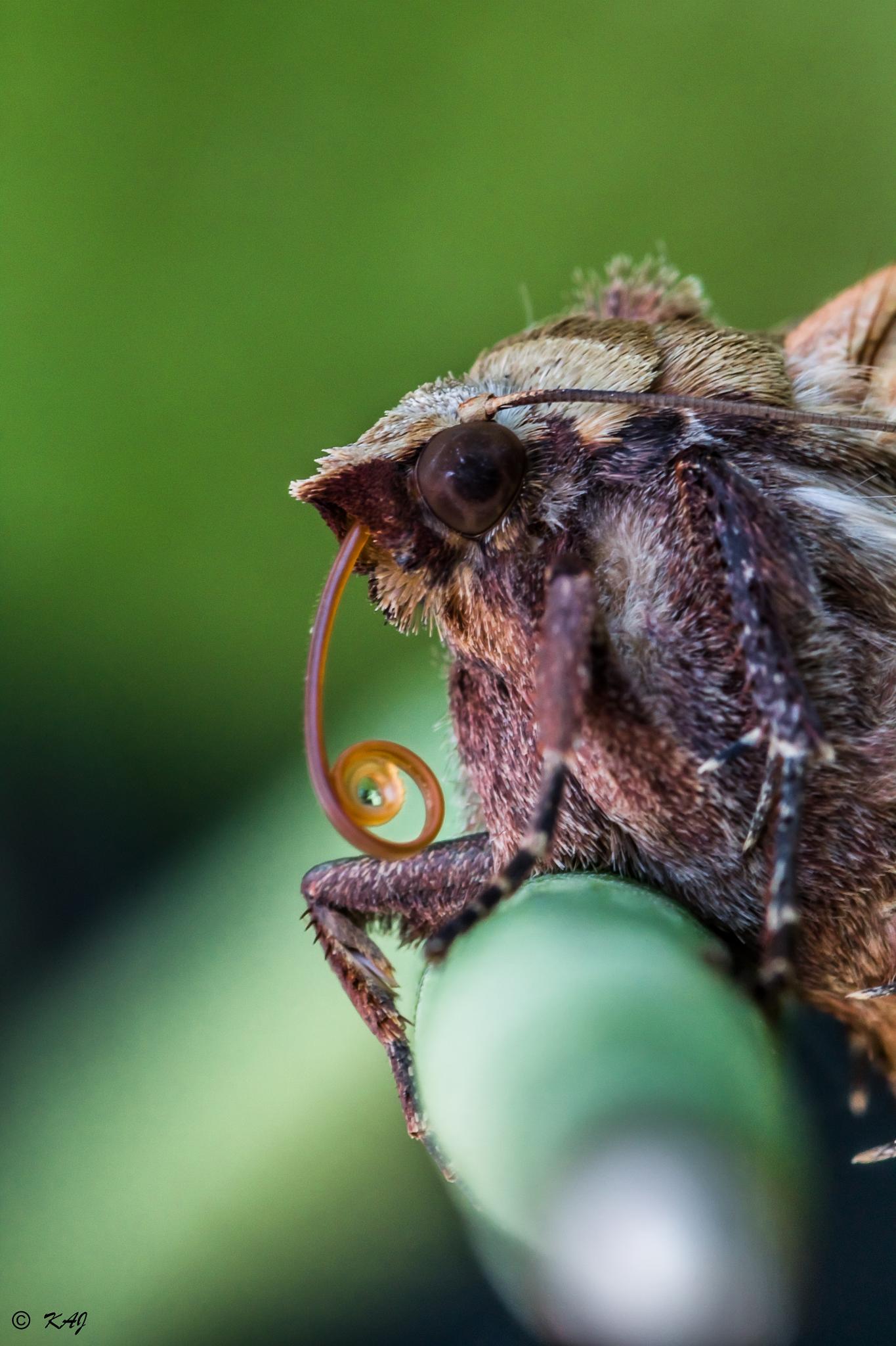 Butterfly Narrow Profile by kaj.jorgensen.