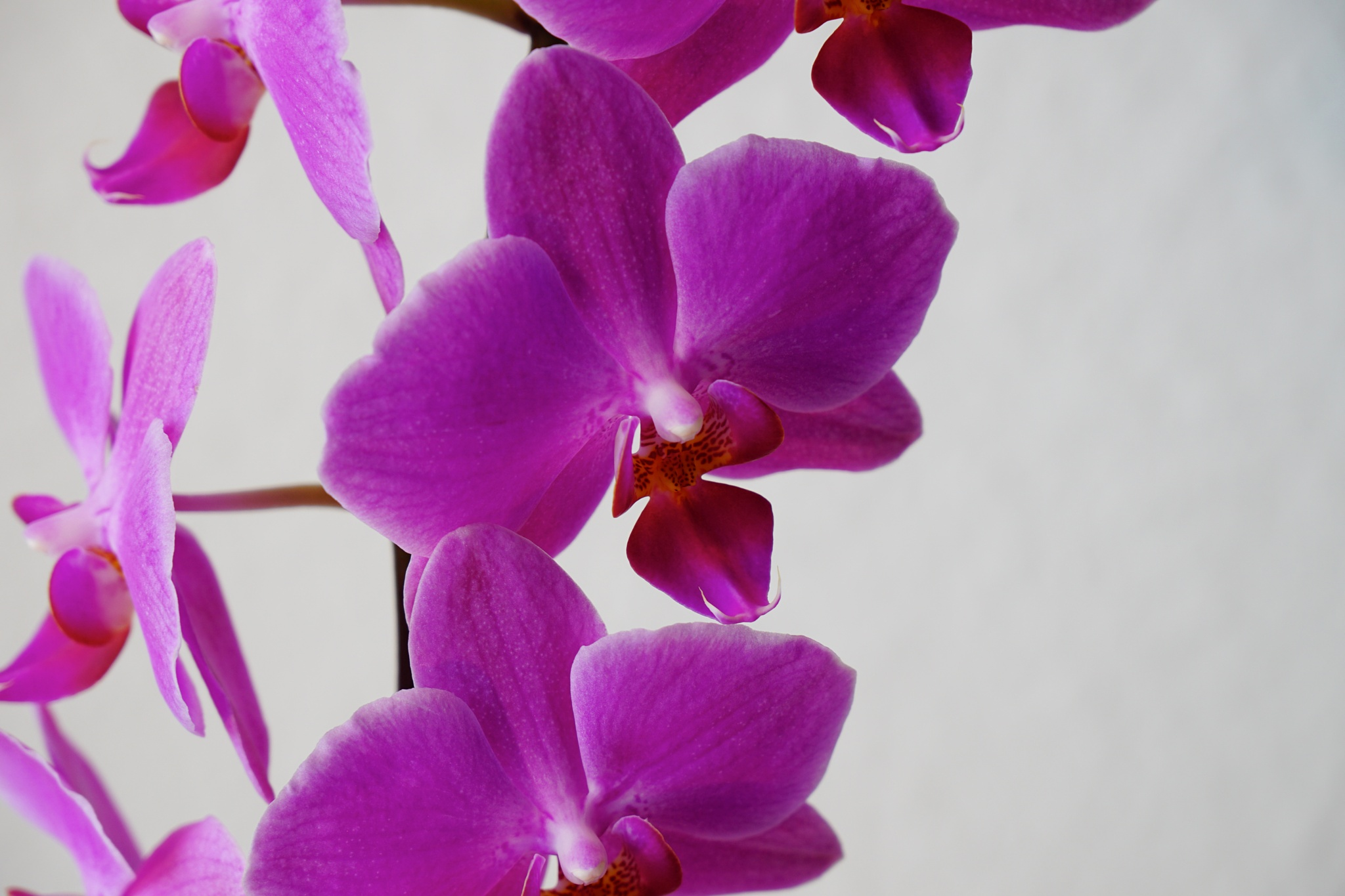 My orchids by Dorte Hedengran