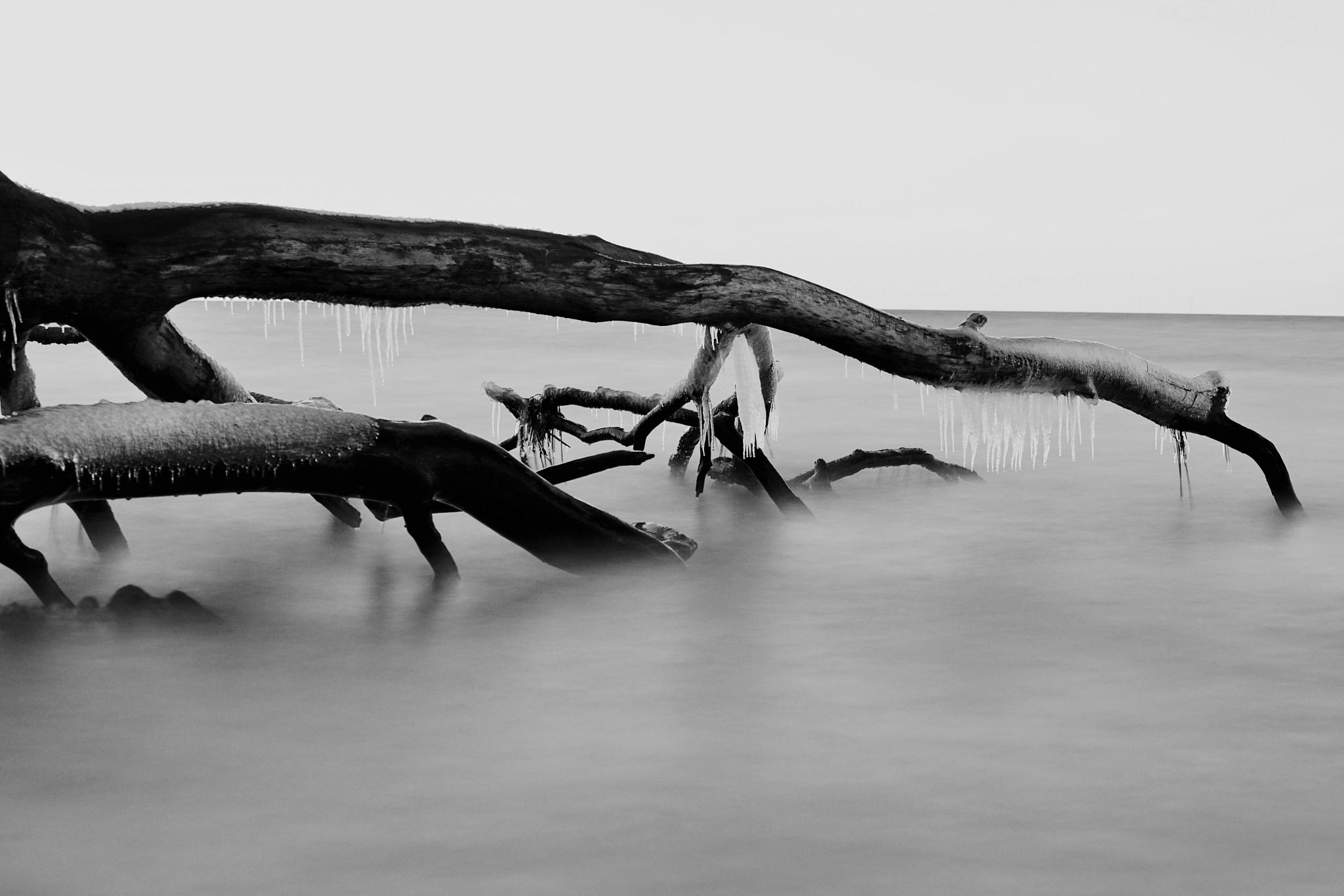 Fallen frozen tree by Dorte Hedengran