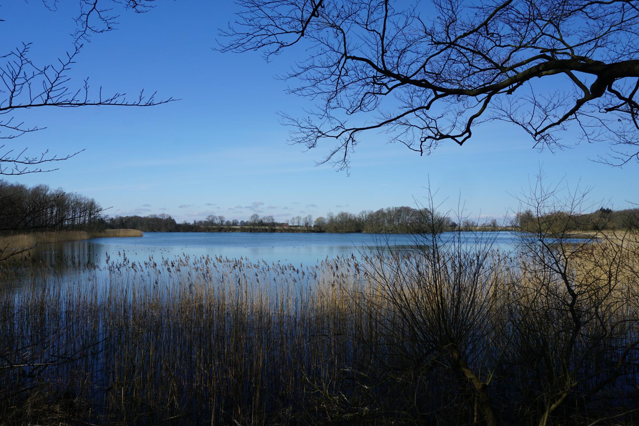 The lake at Gjorslev Bogeskov in Denmark by Dorte Hedengran