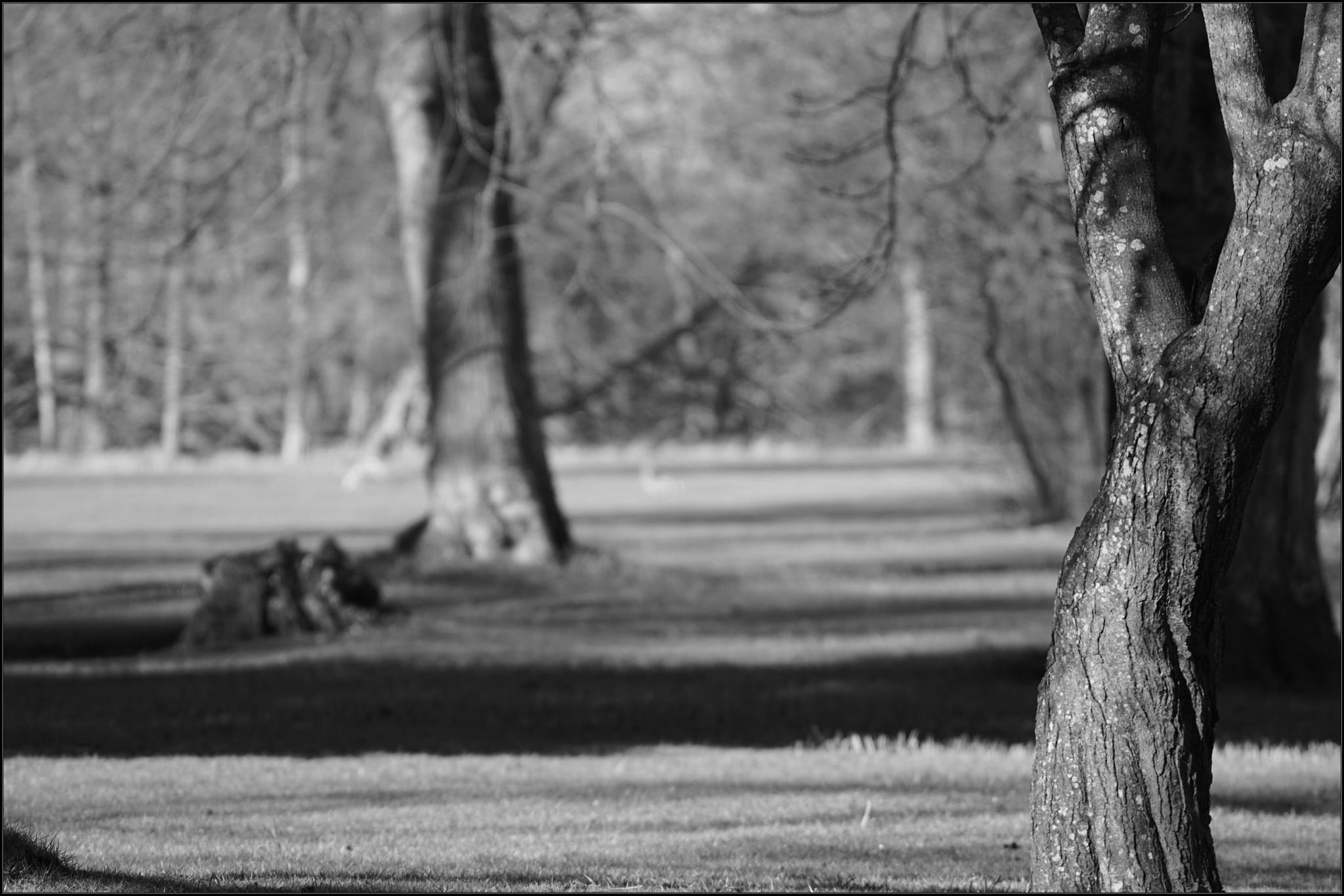Trees in the Castle Park by Dorte Hedengran