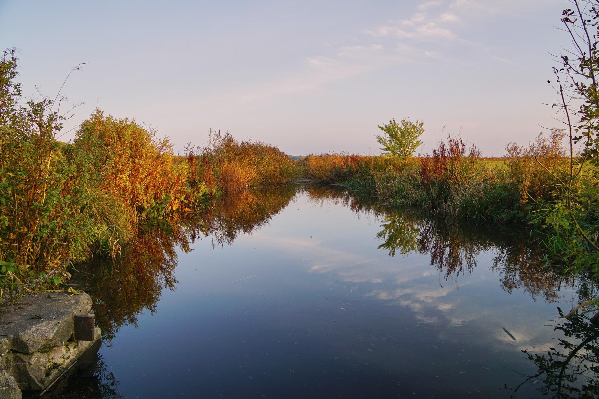 Stream in autumn colors by Dorte Hedengran