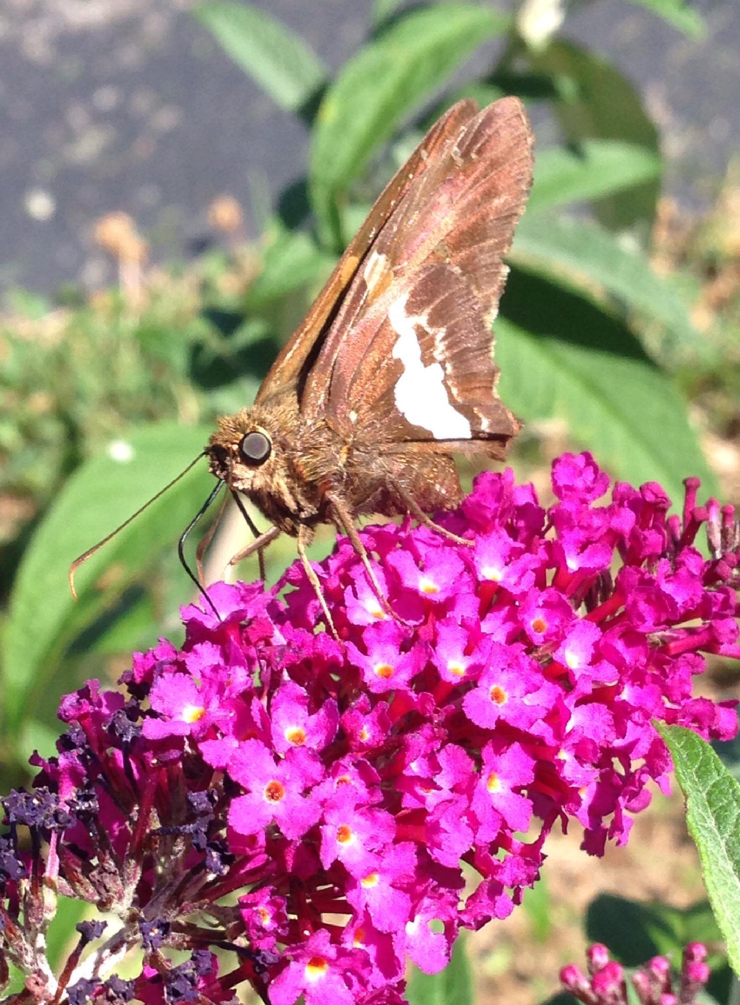 Sweet Nectar  by JoyH