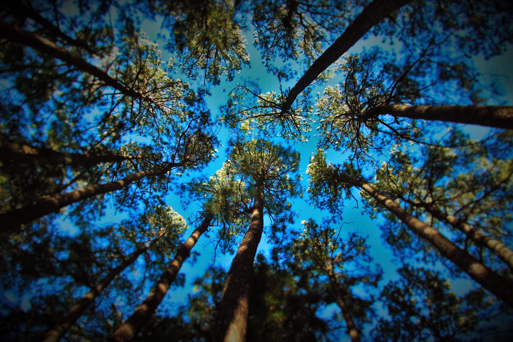 Reaching for the heavens by brant.stevenson