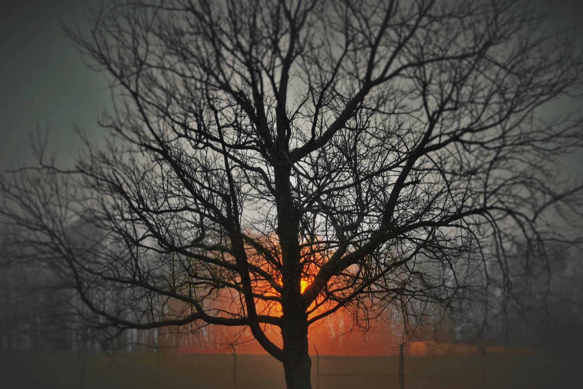 Shining Thru by brant.stevenson