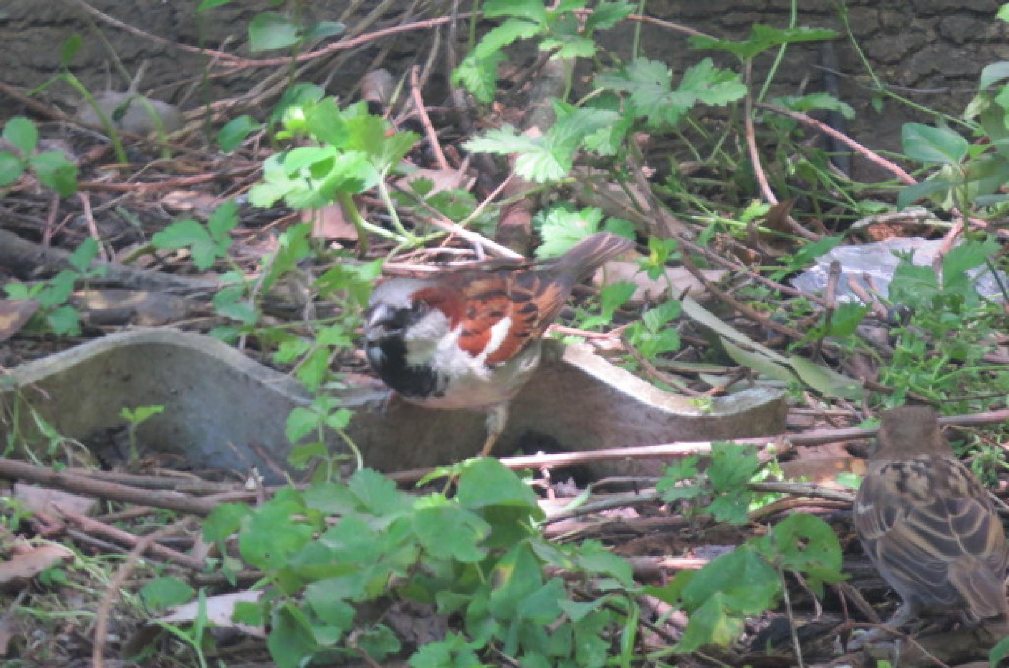 Photo in Animal #bhirds #ornithology #nature