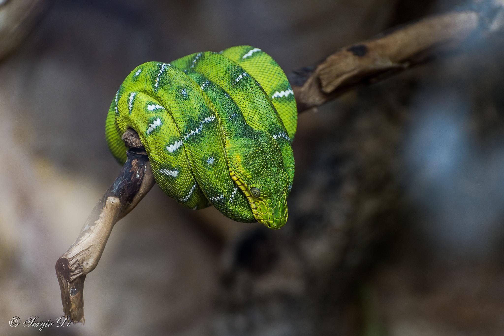 Diamantino verde by sergiodi