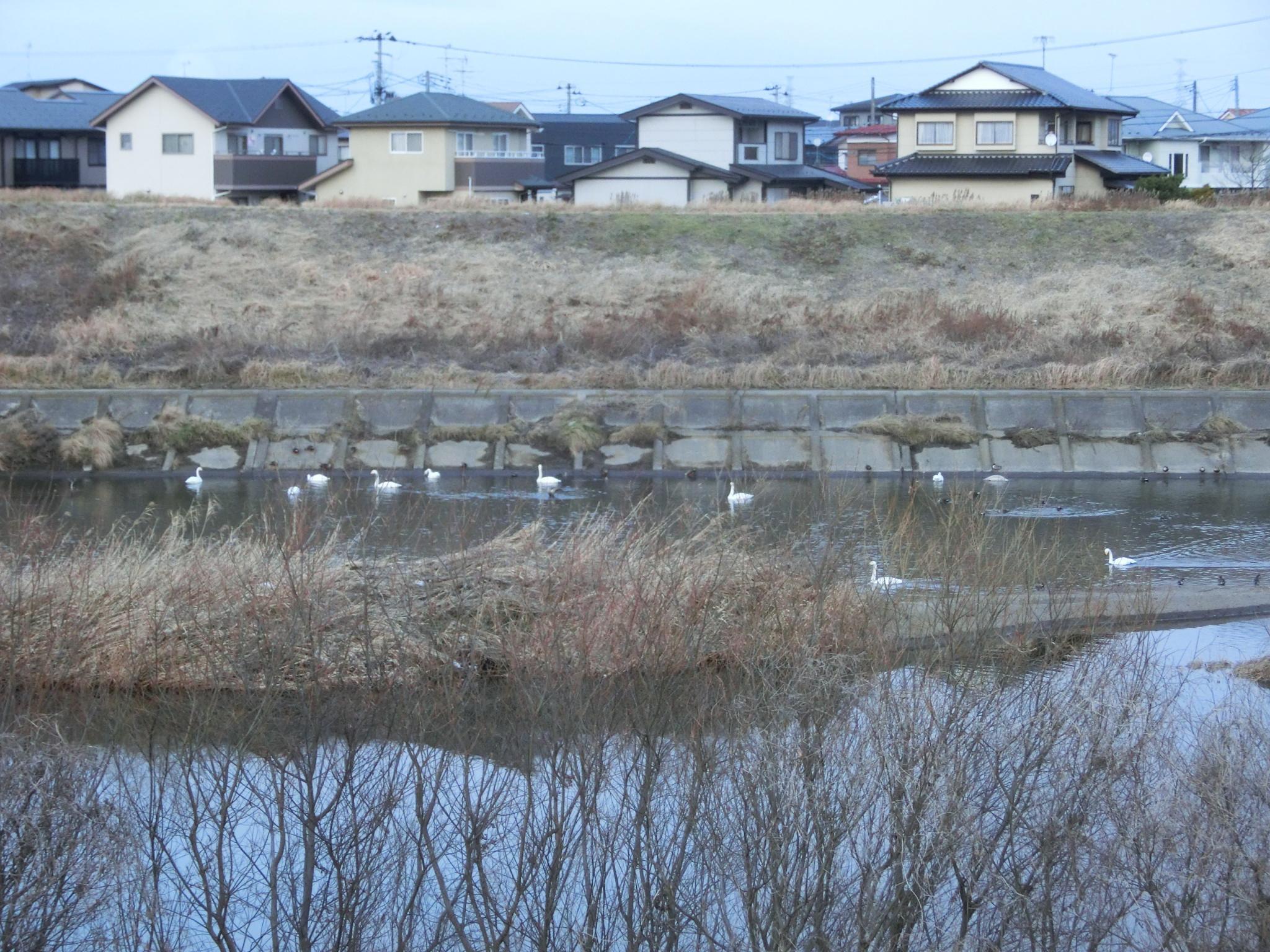 the river near my house by Hiroshi Fukushima