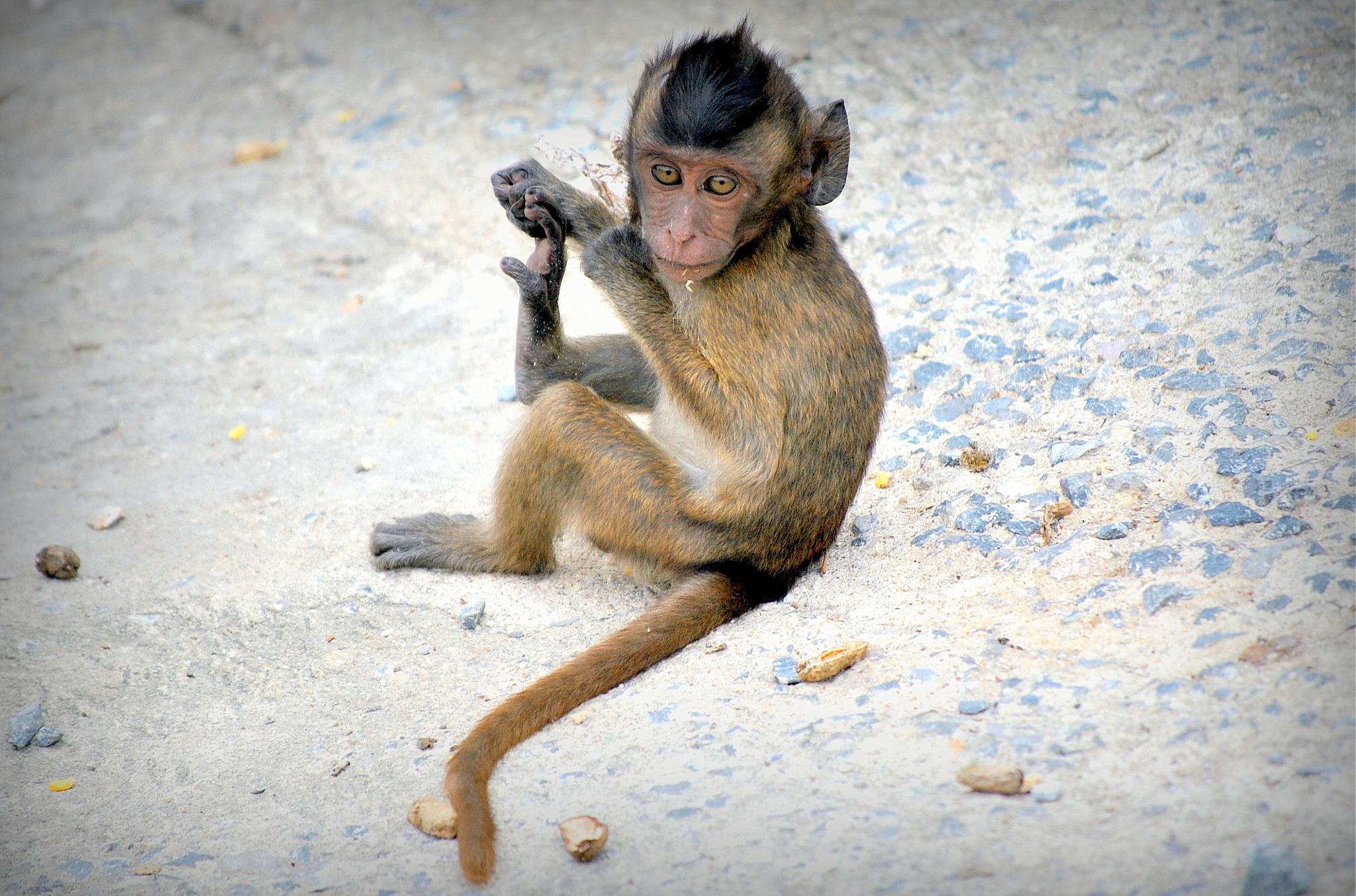 Baby Monkey posing by Fulvio Toso